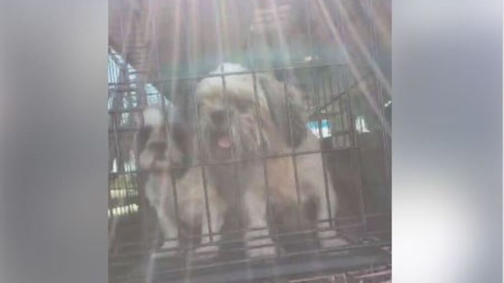 Heartbreaking 46 Dogs Rescued From Kentucky Puppy Mill Owner Charged Wztv