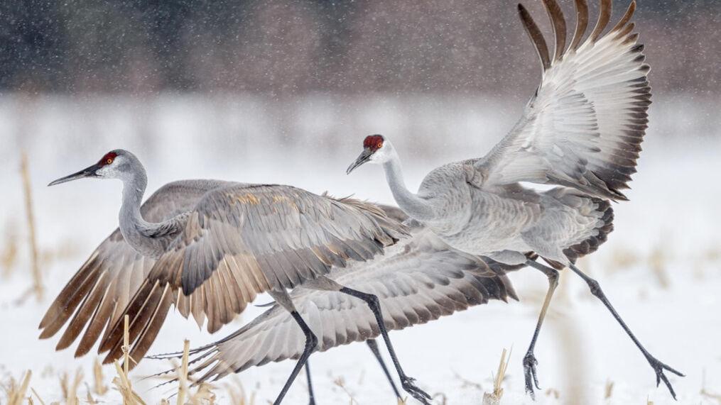 (Xianwei Zeng / Audubon Photography Awards)