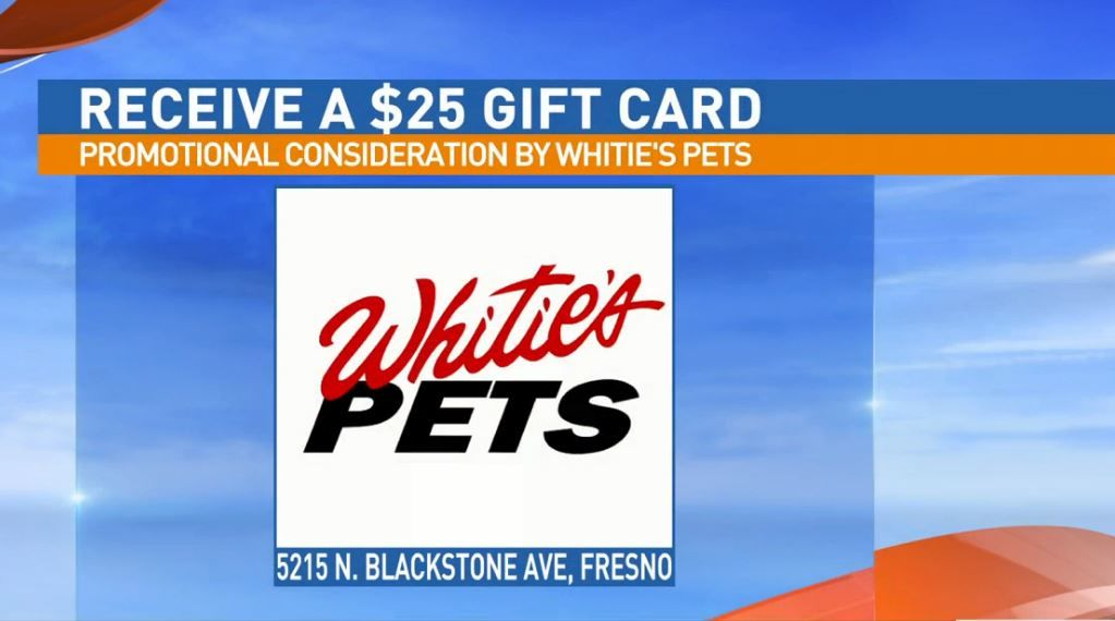 Get a $25 gift certificate to Whitie's Pets for adopting Elsie