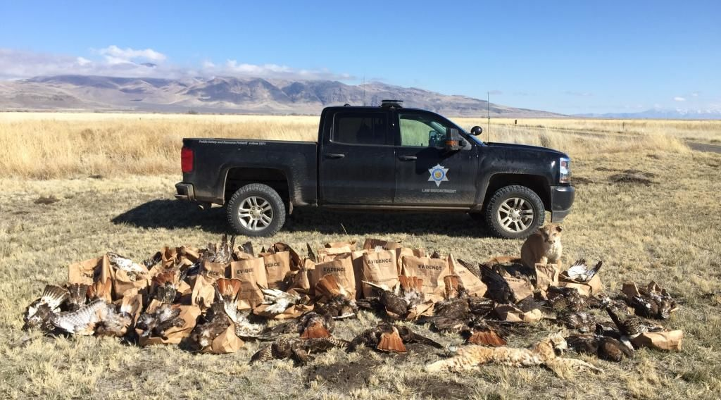 Some of the more than 150 carcasses that wildlife officers seized from Richard Parker's rural northeastern California property.{&nbsp;} <br><p>CDFW photo<br></p>