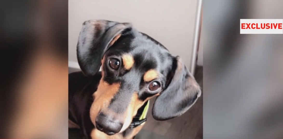 A Davis County family is grieving this week the loss of their dachshund puppy after they say a terrible mix-up at an animal hospital cost their dog its life. (Photo: KUTV)