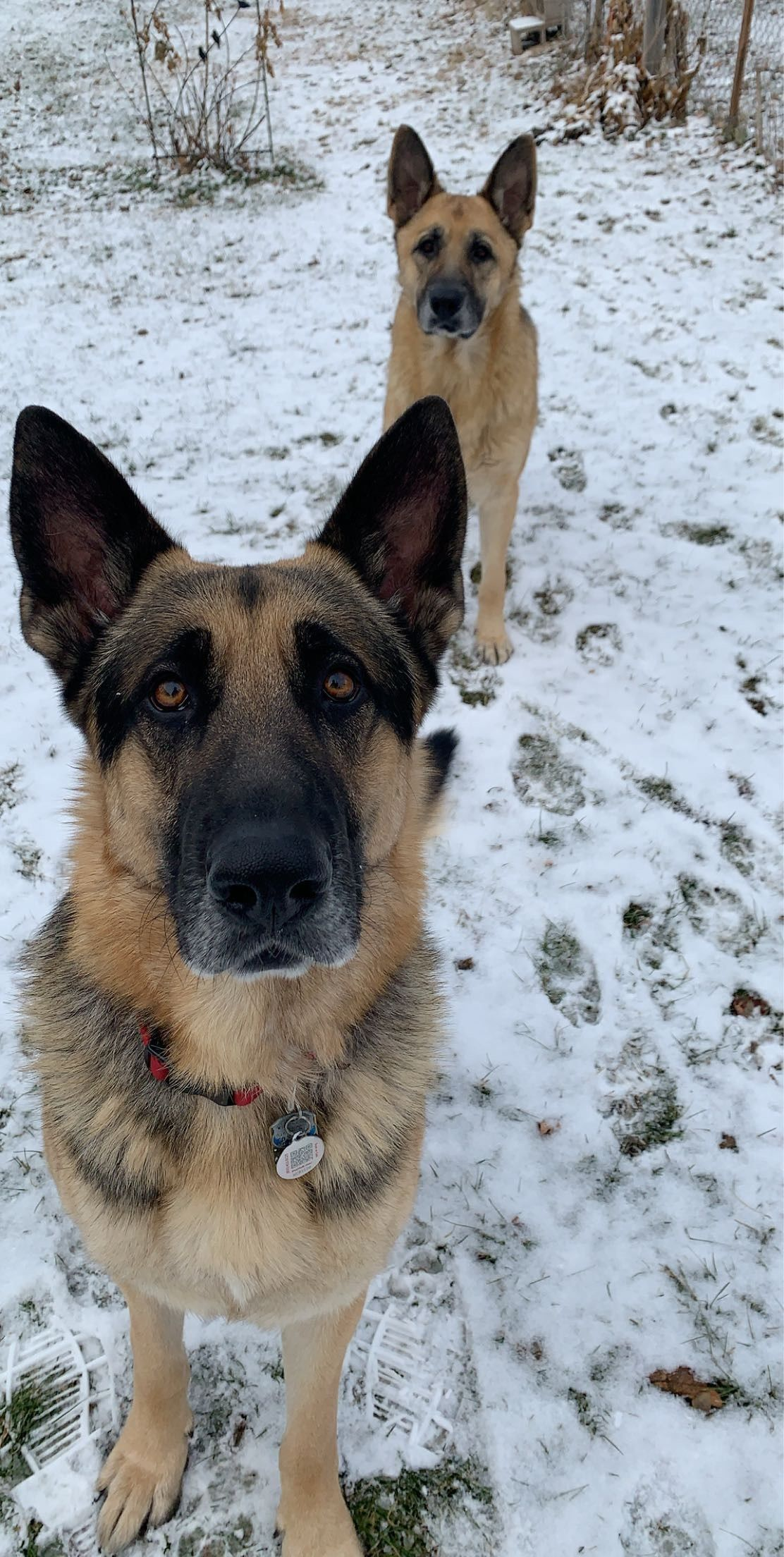 Photographer Aldair Zepeda loves his German shepherds Stuart and Mika. (WWMT){ }