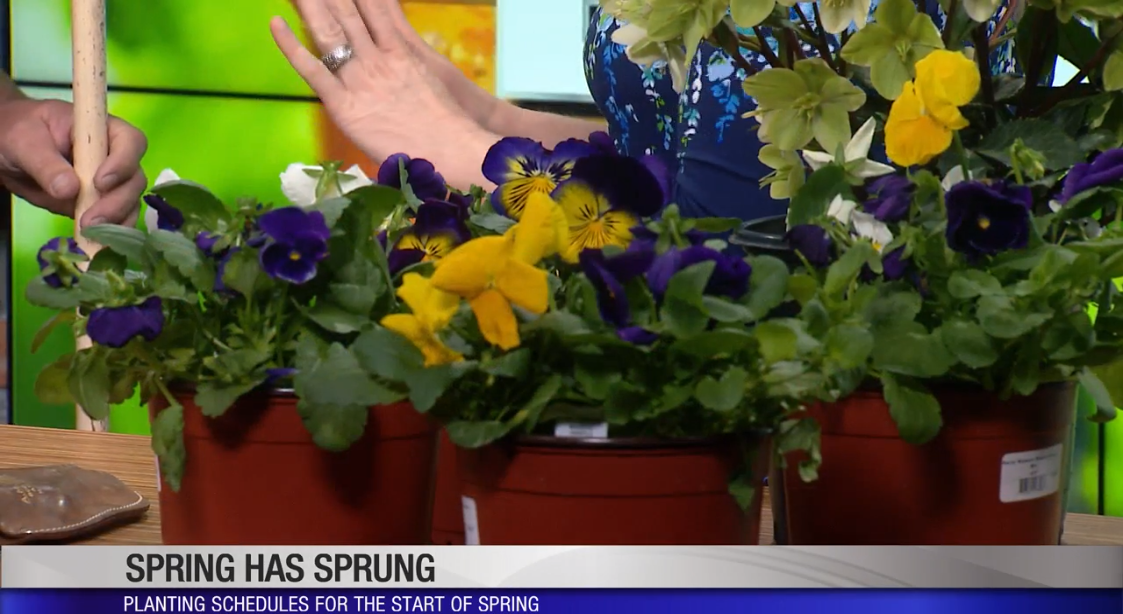 Spring planting tips from the Cincinnati Zoo and Botanical Gardens (WKRC)