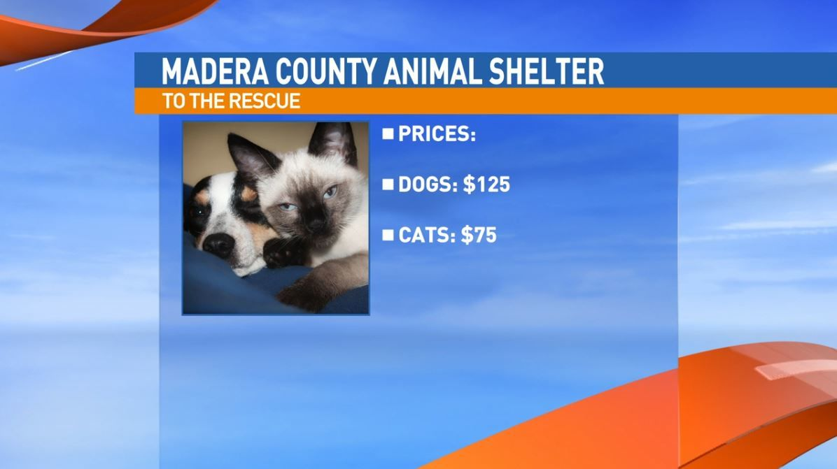 The Madera County Animal Shelter brought a sweet dog looking for a good home.
