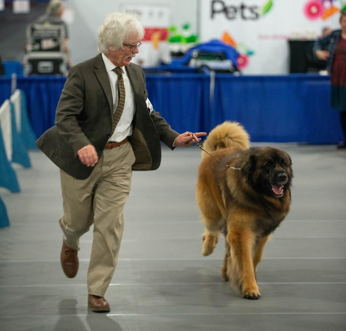 Photos: Dogs Of The 2020 Rose City Classic In Portland
