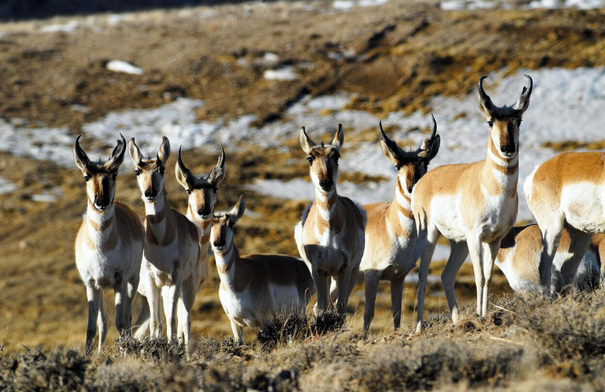 The Utah Division of Wildlife Resources announced that applications for big game hunting permits will open on Jan. 28. (Photo: Utah Division of Wildlife Resources)