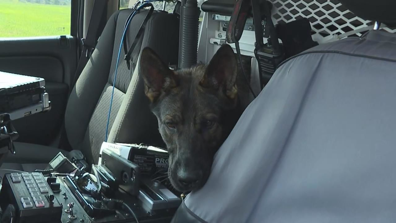 <p>The warnings come every summer: don't leave your dog in the car unattended in the heat. The exception: if your dog is a police K-9 and has a special vehicle like the Ohio State Highway Patrol's dogs do. (WSYX/WTTE){&nbsp;}<br></p>