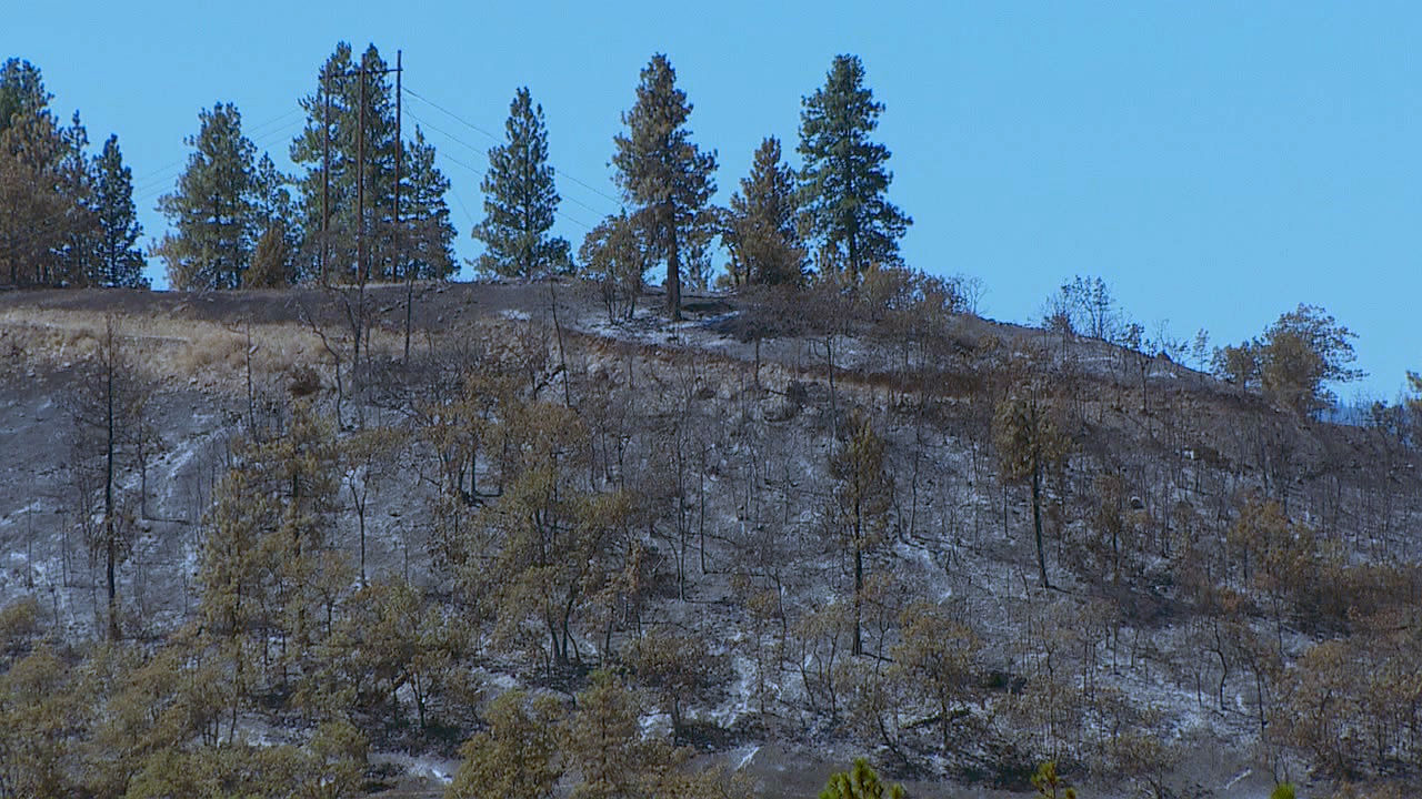 A burned ridge Friday, Aug. 14, 2020 from the Mosier Creek Fire. (KATU)