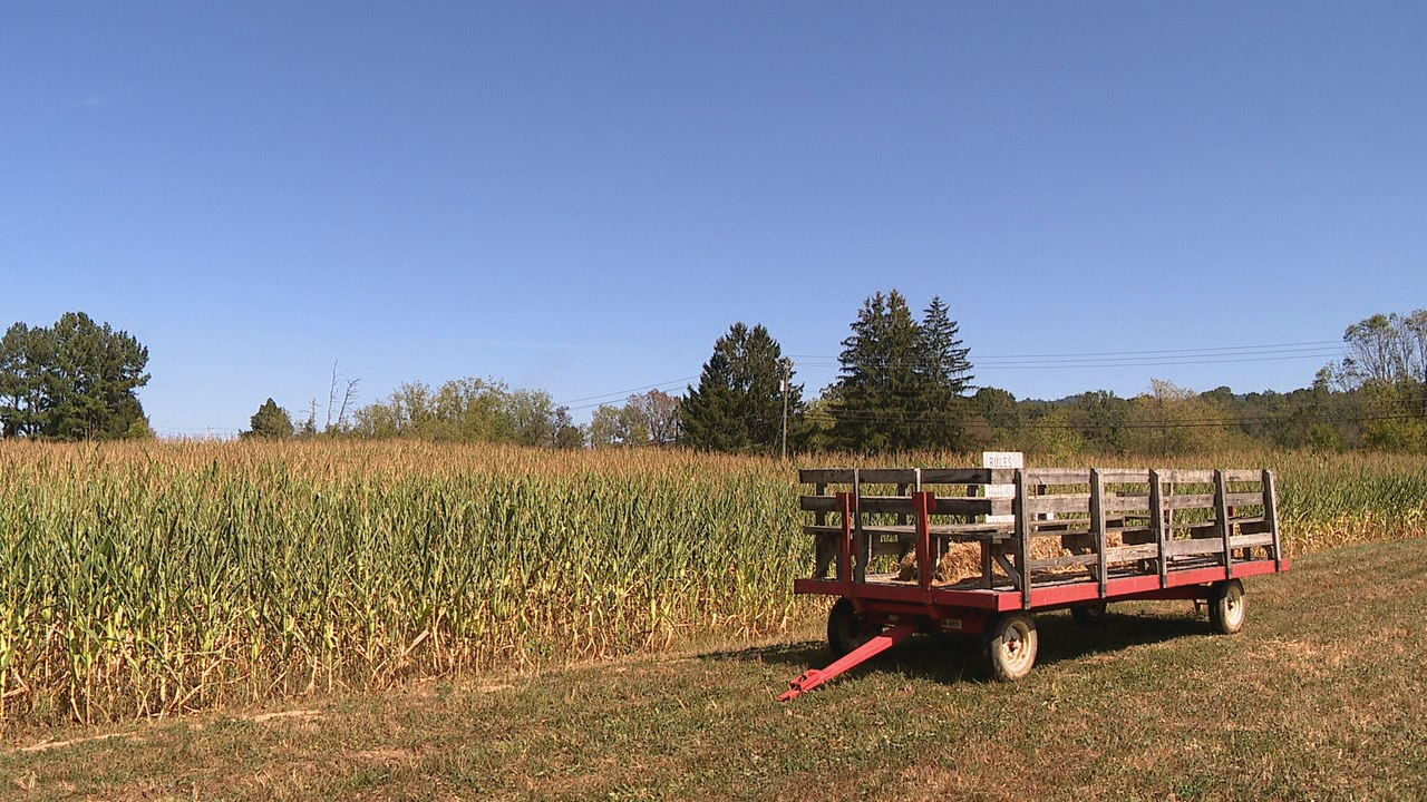 """He's kinda like a local hometown hero,"" said Skipper Russell, owner and operator of the Cold Mountain Corn Maize. Photo credit: WLOS staff"