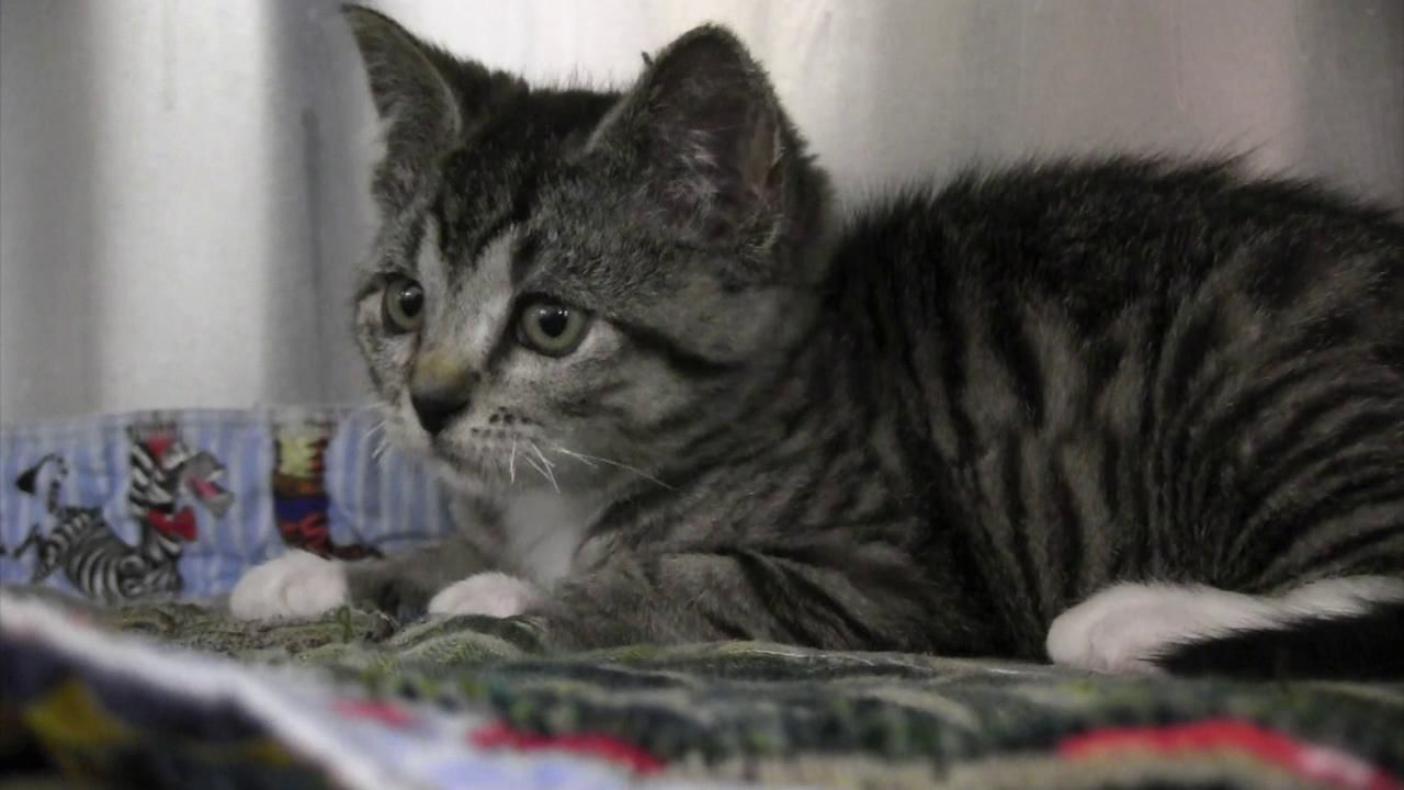 Kitten Video courtesy Washington County Sheriff's Office{ }Thumbnail