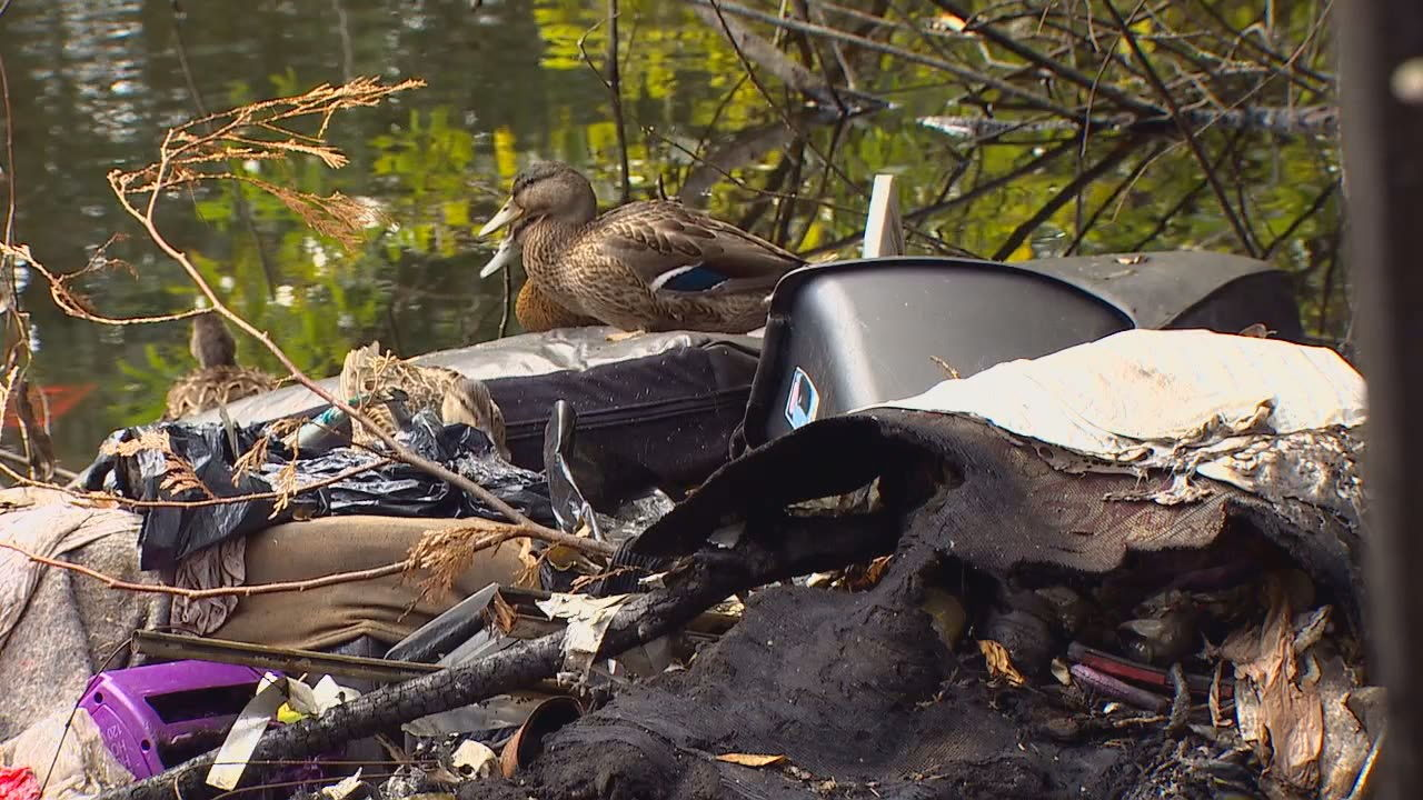 Homeless people set up several camps at a protected wetland in Kent. When a fire broke out, the homeless moved on. (KOMO News){&nbsp;}<p></p>