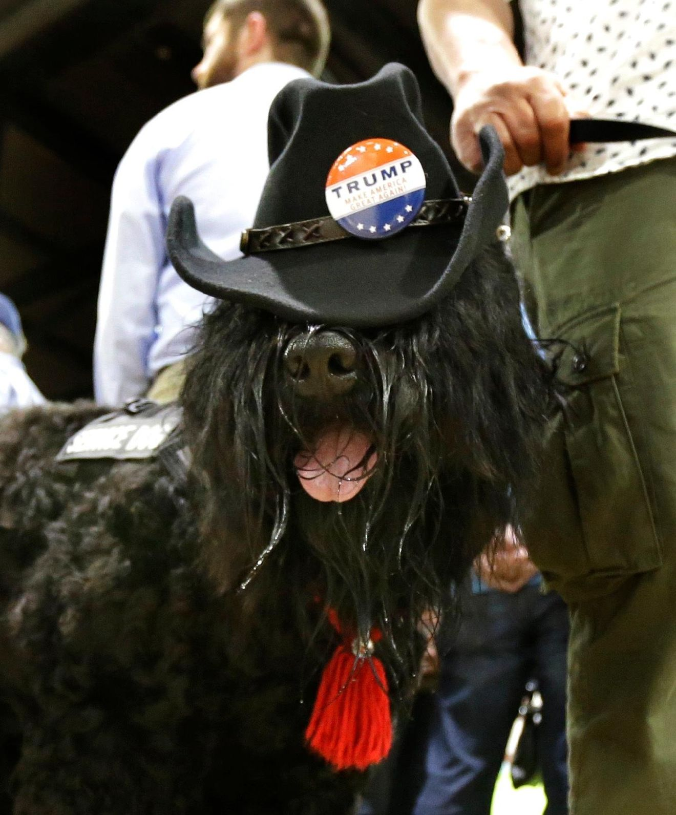 """Monster,"" a service dog that belongs to Gavin Behr, of Hood River, Ore., wears a cowboy hat with a Donald Trump button before the start of a rally for the Republican presidential candidate in Eugene, Ore., Friday, May 6, 2016. (AP Photo/Ted S. Warren)"