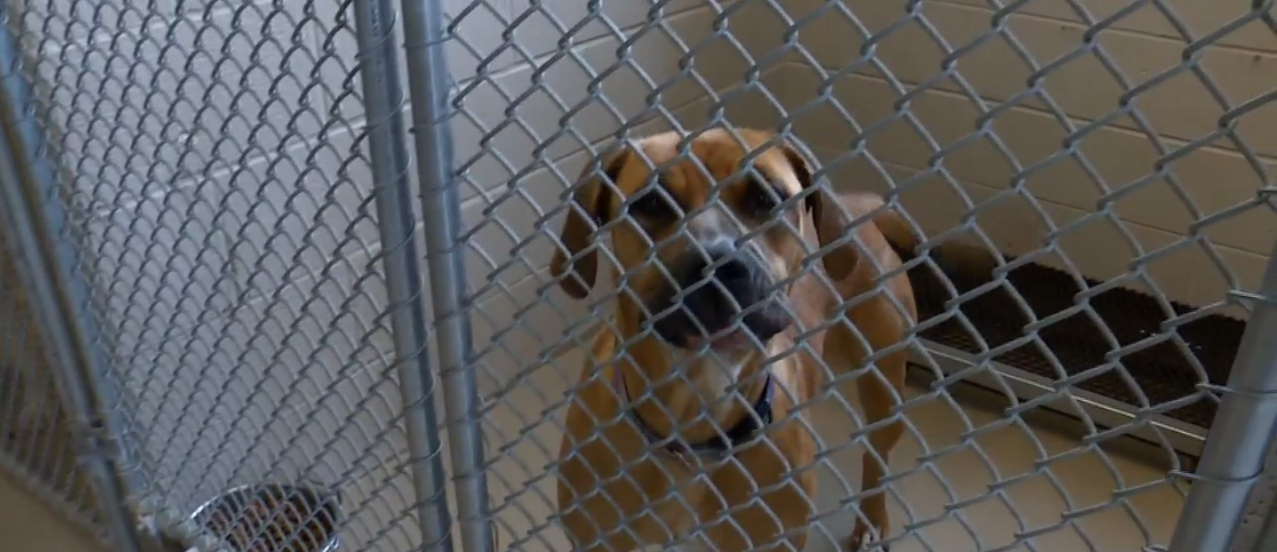 Four local shelters will waive their adoption fees Saturday. // WSBT 22