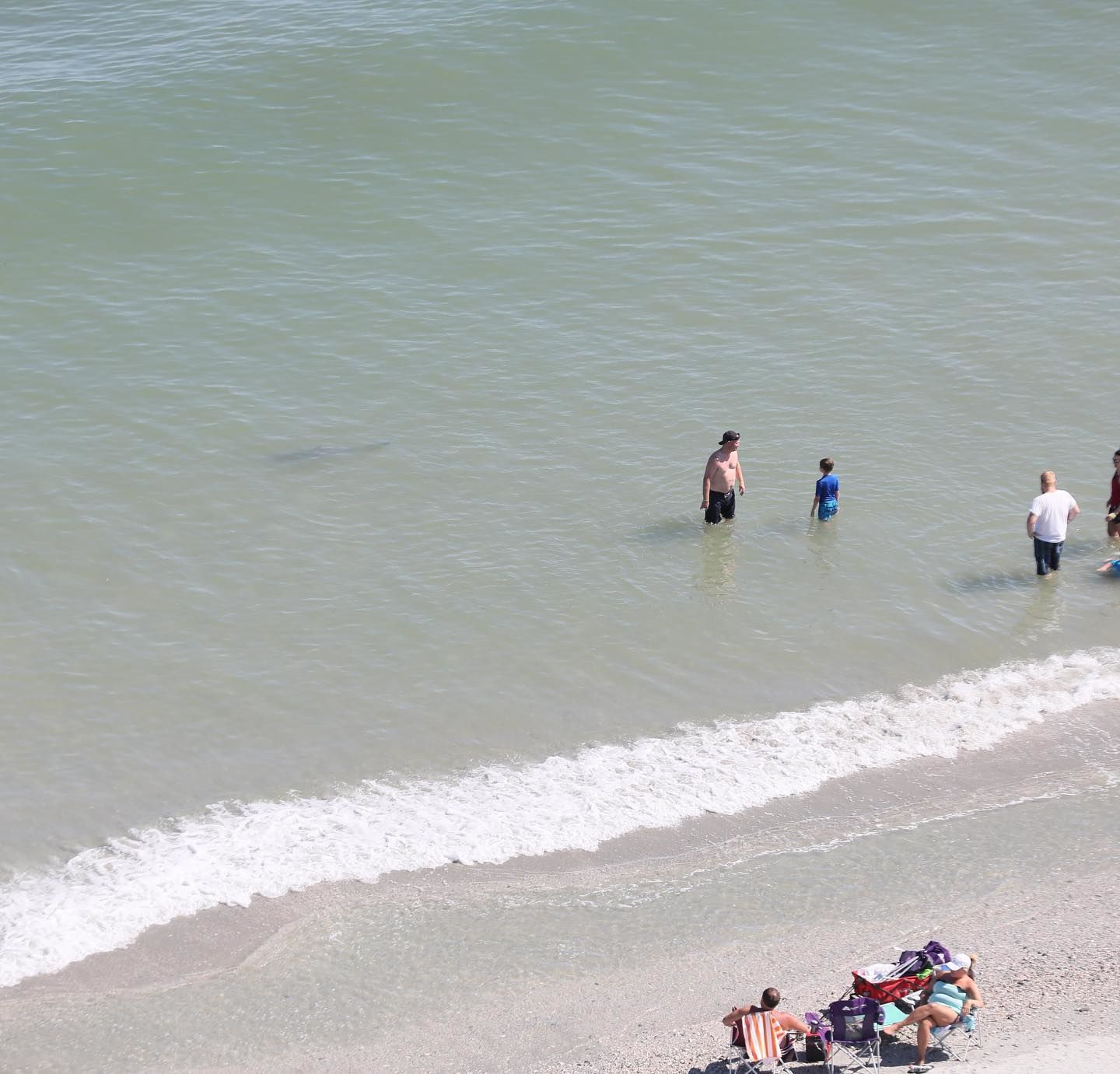 Ginger Gilmer of Tennessee captured photos of sharks swimming within feet of swimmers at North Myrtle Beach. (Photo courtesy of Ginger Gilmer)