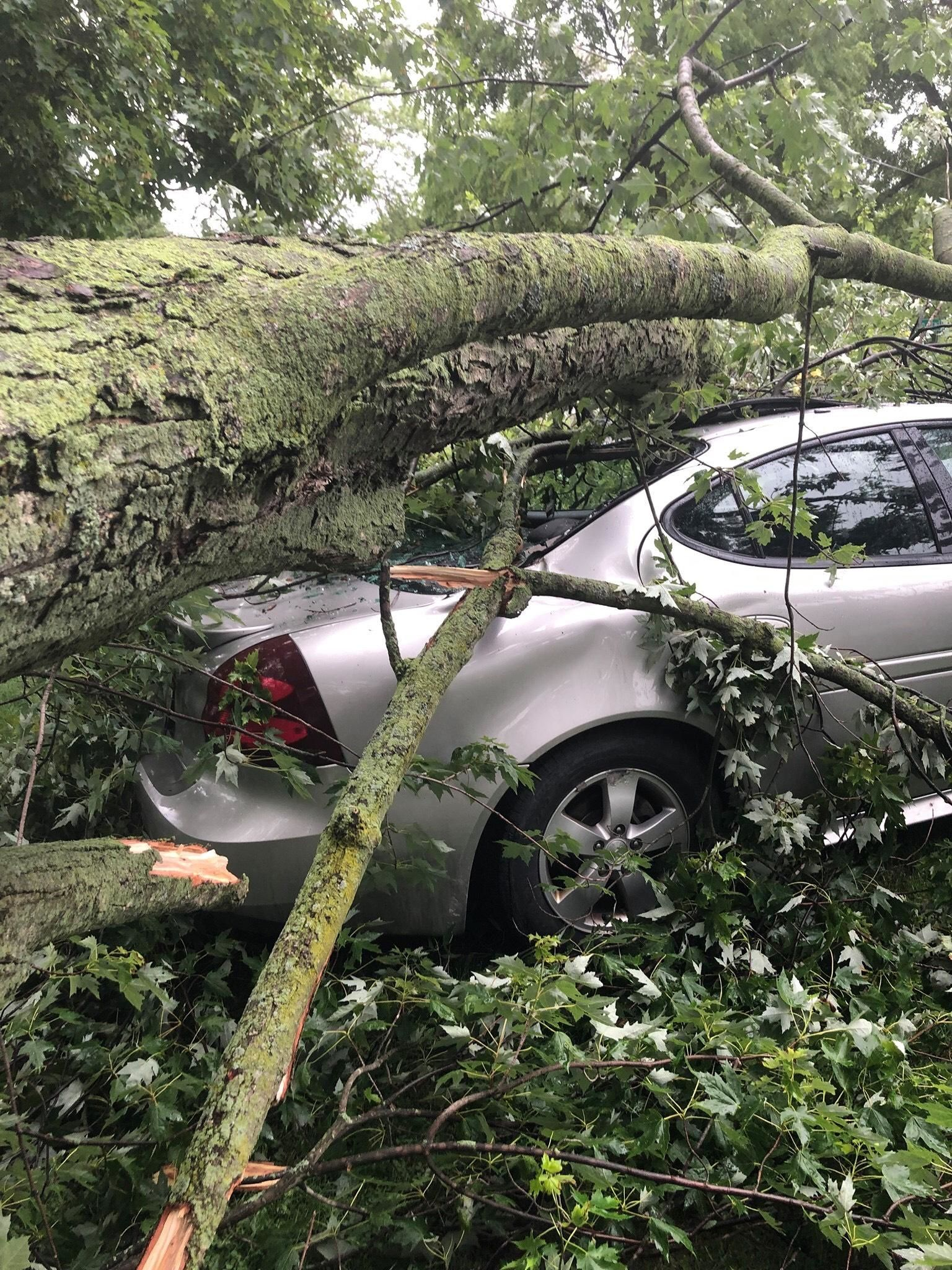 Teen suffered only minor injuries after a tree fell on him and car.  (Picture from Marie Lewis)<p></p>