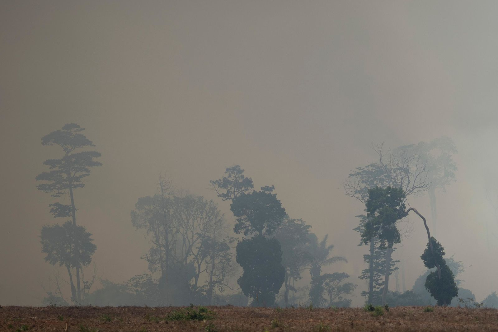 Fire consumes a field in Novo Progresso, Para state, Brazil, Saturday, Aug. 24, 2019. Under increasing international pressure to contain fires sweeping parts of Amazon, Brazilian President Jair will use of the military to battle the massive blazes. (AP Photo/Leo Correa)