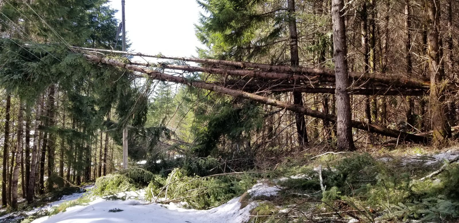 A February 2019 snowstorm hit Lane and Douglas county hard. Electrical utilities received FEMA grants to help make repairs - but fine print in the 2017 GOP tax bill makes those grants taxable, which could drive up costs for ratepayers.{ } (Douglas Electric Cooperative photo)