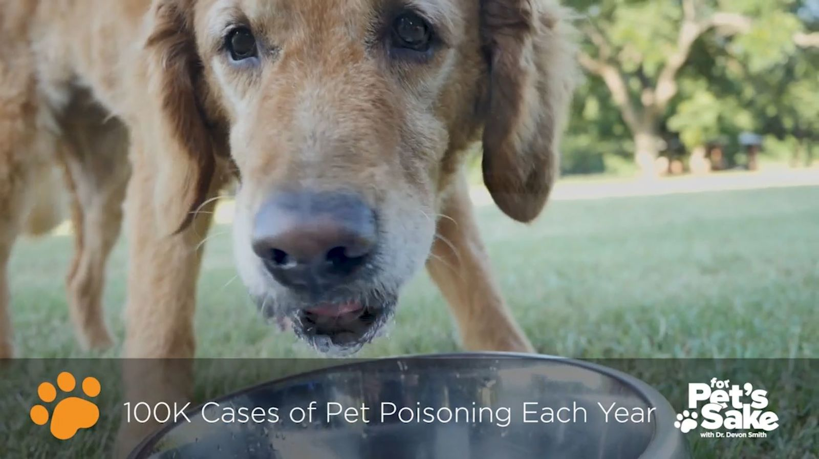 100,000 cased of accidental pet poisoning are reported each year (Sinclair Broadcasting Group)