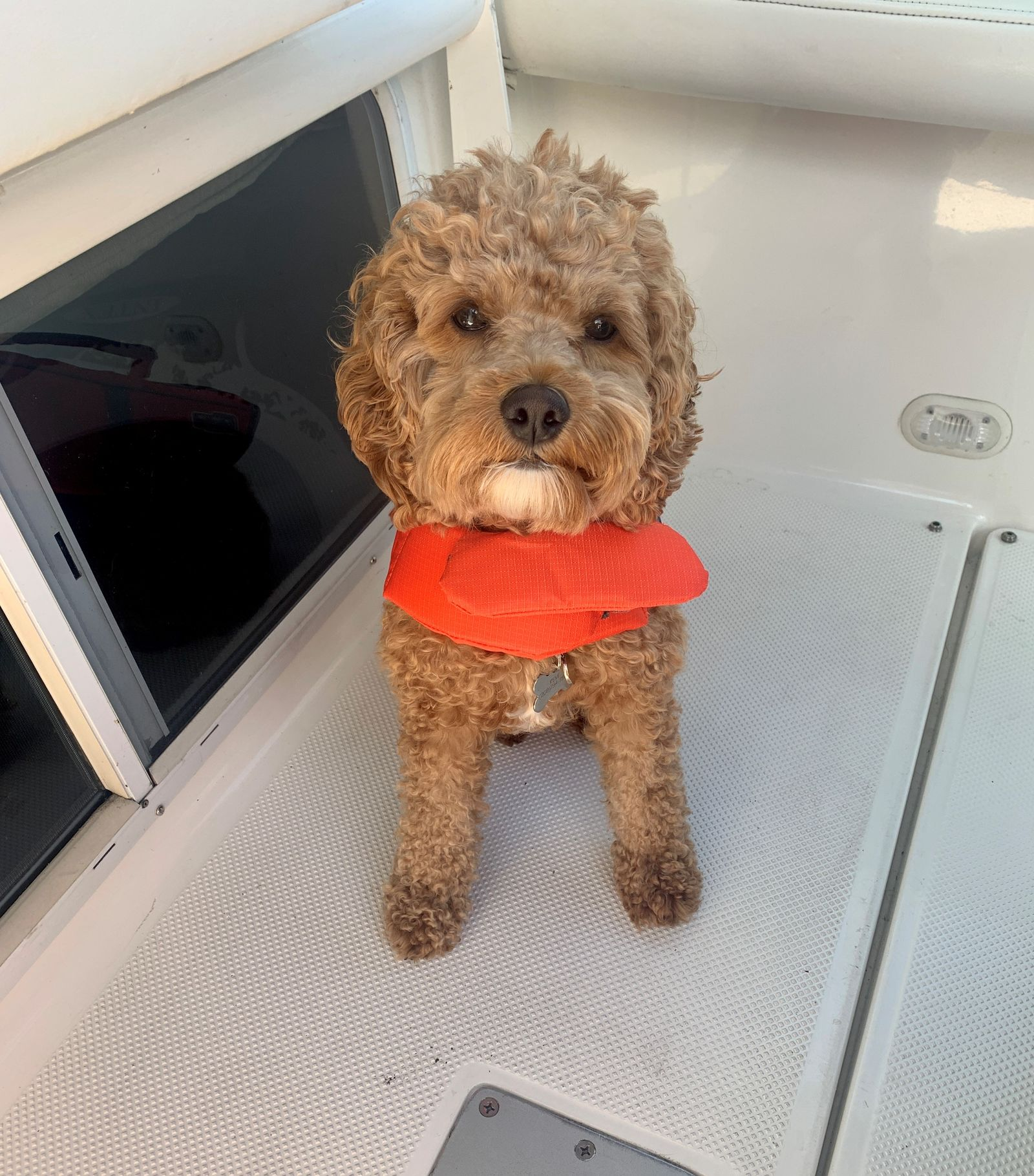 You may have seen Reporter Hannah Knowles' dog Remi on TV before. She celebrates the golden doodle on National Dog Day. (WWMT)
