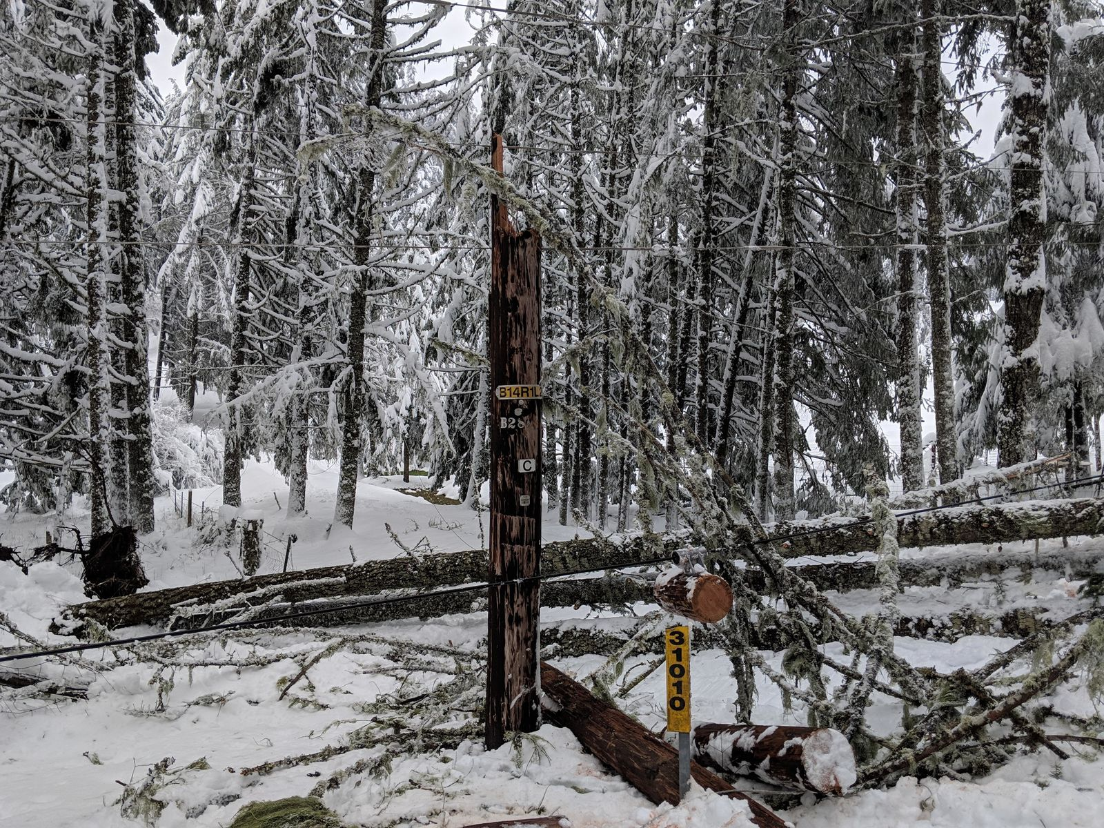 Snow storm damage throughout Lane Electric Cooperative service territory, Feb. 27, 2019. A February 2019 snowstorm hit Lane and Douglas county hard. Electrical utilities received FEMA grants to help make repairs - but fine print in the 2017 GOP tax bill makes those grants taxable, which could drive up costs for ratepayers. (Lane Electric Cooperative photo)