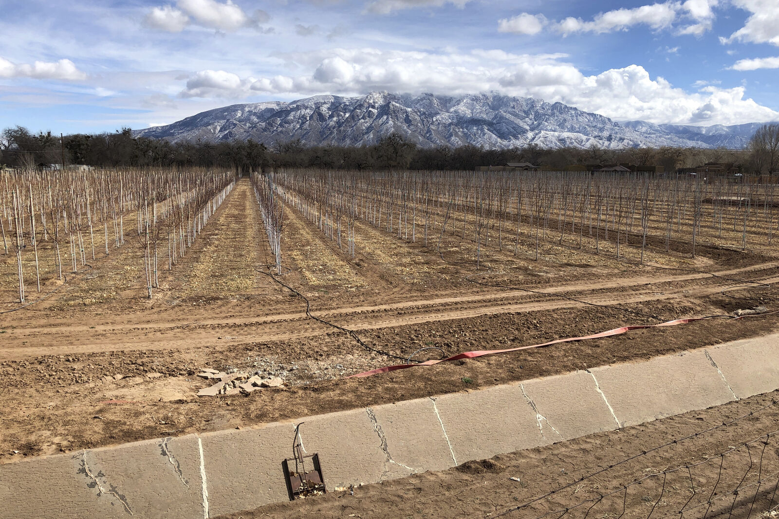 FILE - In this Feb. 17, 2021, file photo, an empty irrigation canal lines a tree farm in Corrales, N.M., as snow covers the Sandia Mountains in the background. (AP Photo/Susan Montoya Bryan, File)