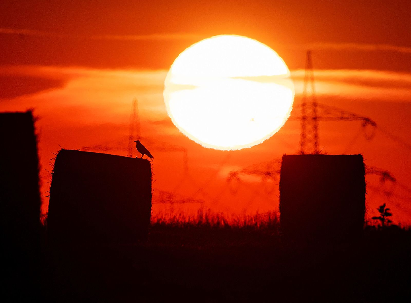 FILE - In this file photo dated Thursday, July 25, 2019, a bird sits on a straw bale on a field in Frankfurt, Germany, as the sun rises during an ongoing heatwave in Europe. (AP Photo/Michael Probst, FILE)