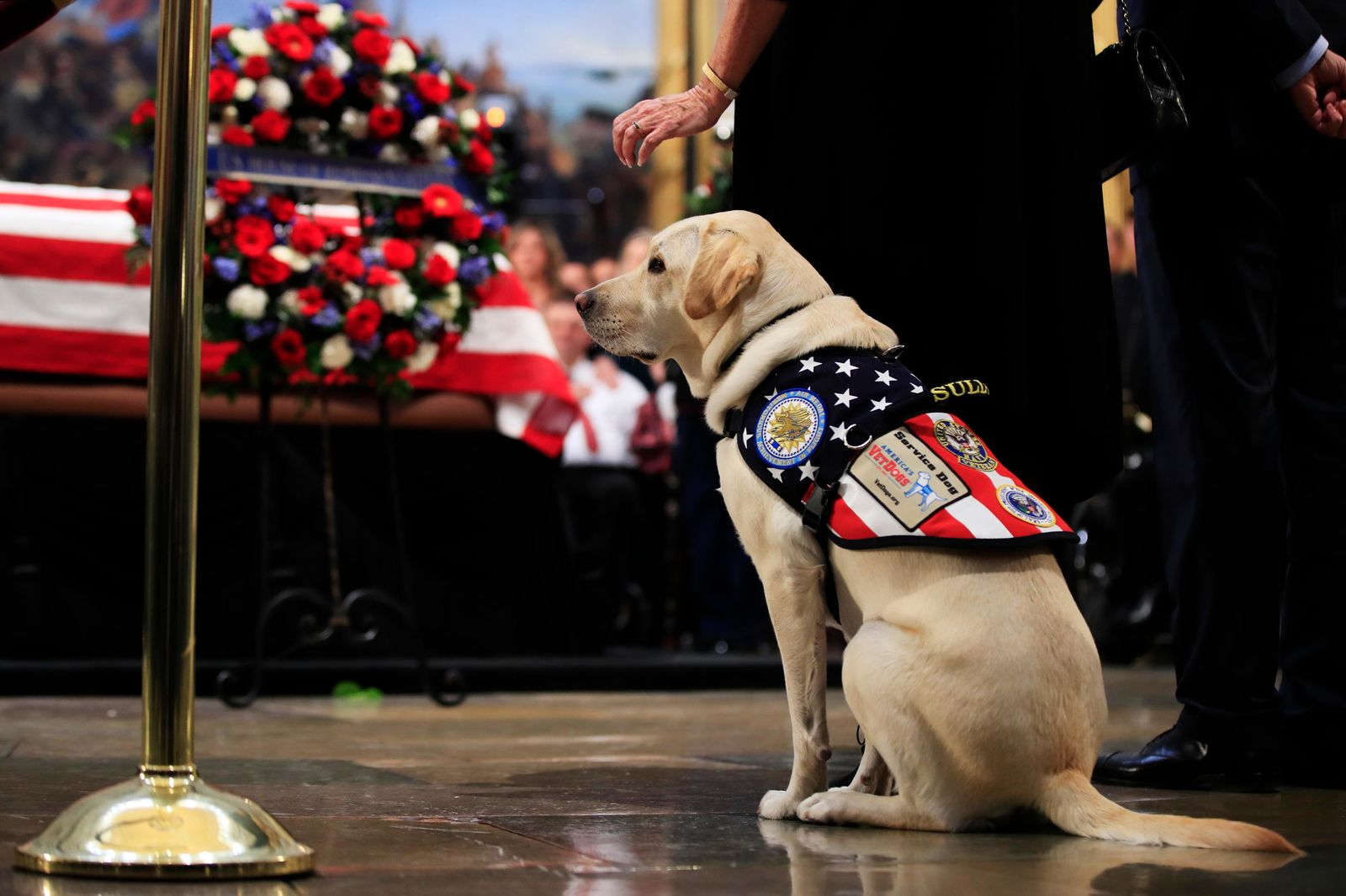 Sully, former President George H.W. Bush's service dog, pays his respect to President Bush as he lie in state at the U.S. Capitol in Washington, Tuesday, Dec. 4. (AP Photo/Manuel Balce Ceneta)