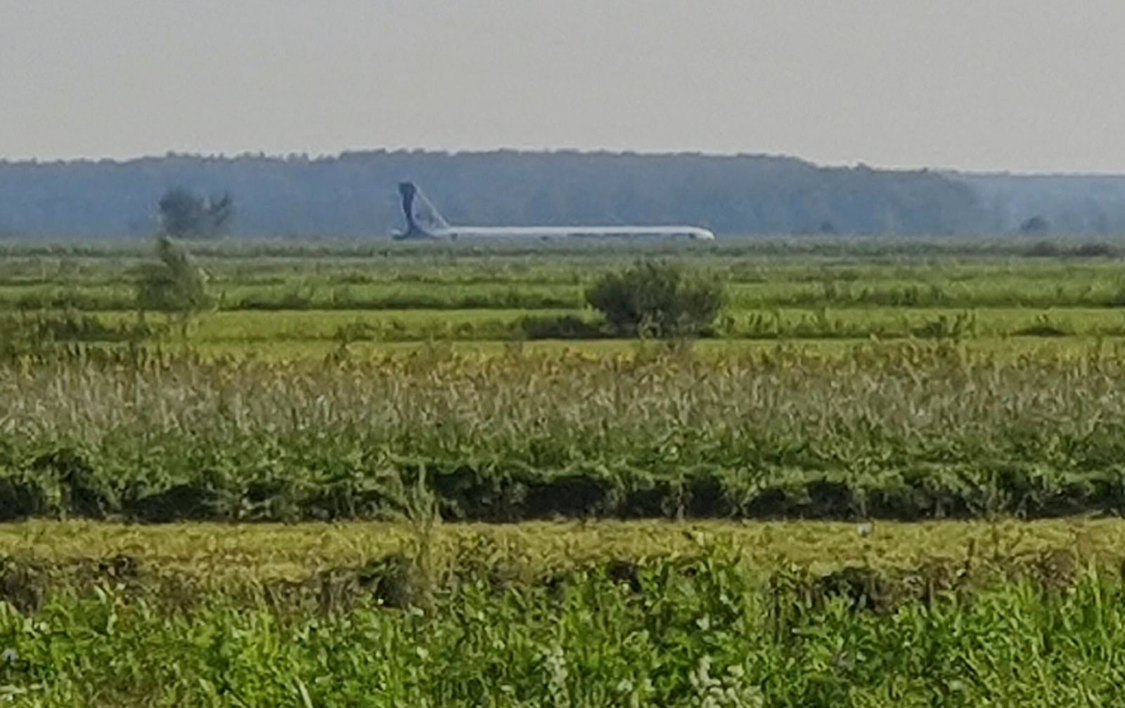 A Russian Ural Airlines' A321 plane is seen after an emergency landing in a cornfield near Ramenskoye, outside Moscow, Russia, Thursday, Aug. 15, 2019.{ } (Denis Voronin, Moscow News Agency via AP)