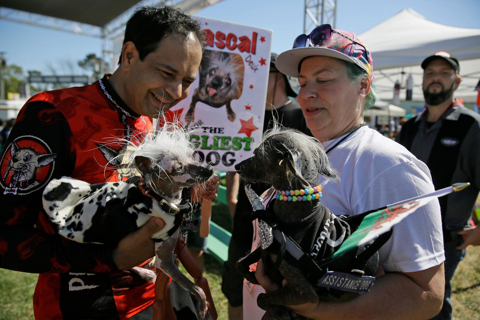 Rascal, left, a Chinese Crest, held by Dane Andrew of Sunnyvale, Calif., meets Chase, right, a Chinese Crested Harke, held by Storm Shayler, right, of Britain, before the start of the World's Ugliest Dog Contest at the Sonoma-Marin Fair Friday, June 23, 2017, in Petaluma, Calif. (AP Photo/Eric Risberg)