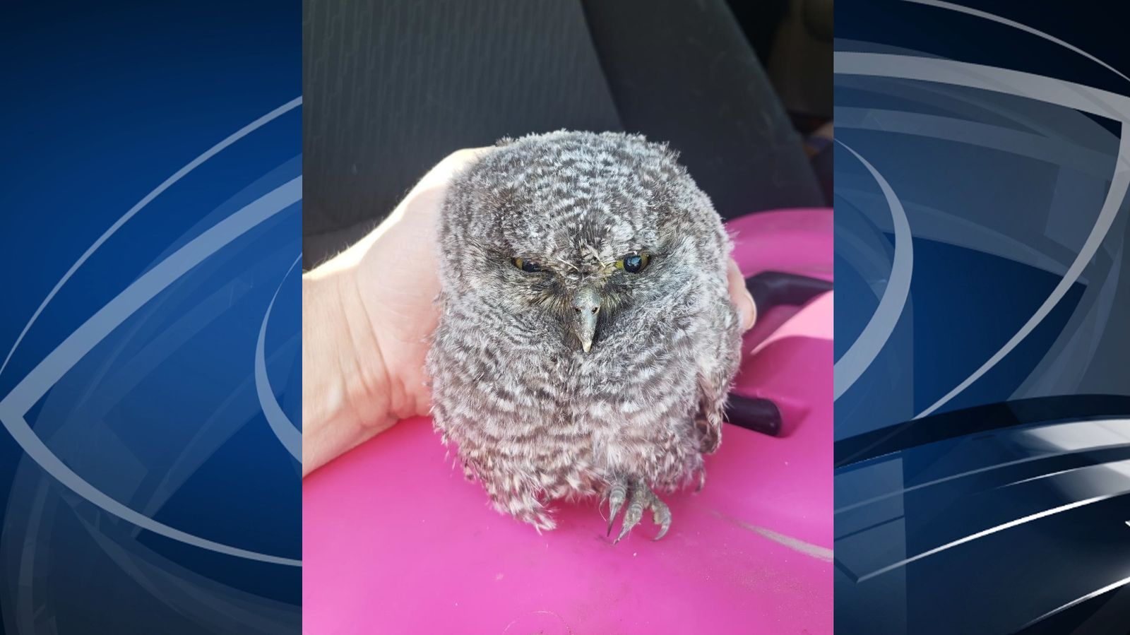 Provo officers rescue baby owl who fell from tree. (Photo: Provo Police Department)