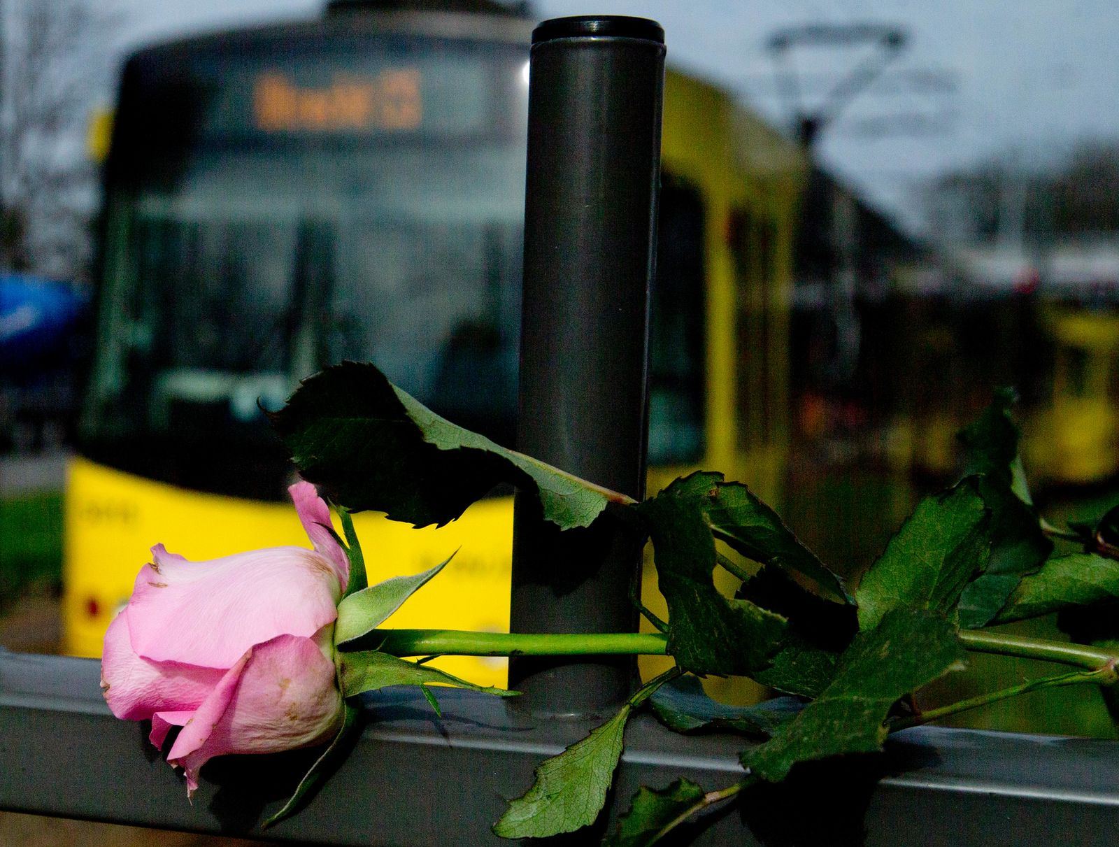 A tram passes a rose at the site of a shooting incident in a tram in Utrecht, Netherlands, Tuesday, March 19, 2019.{ } (AP Photo/Peter Dejong)