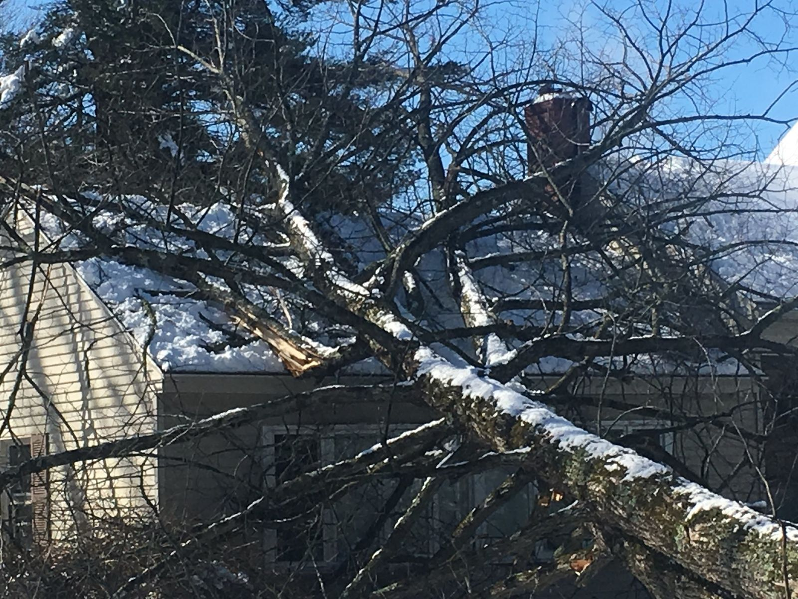 A tree fell on a home in Falmouth Tuesday morning (WGME)
