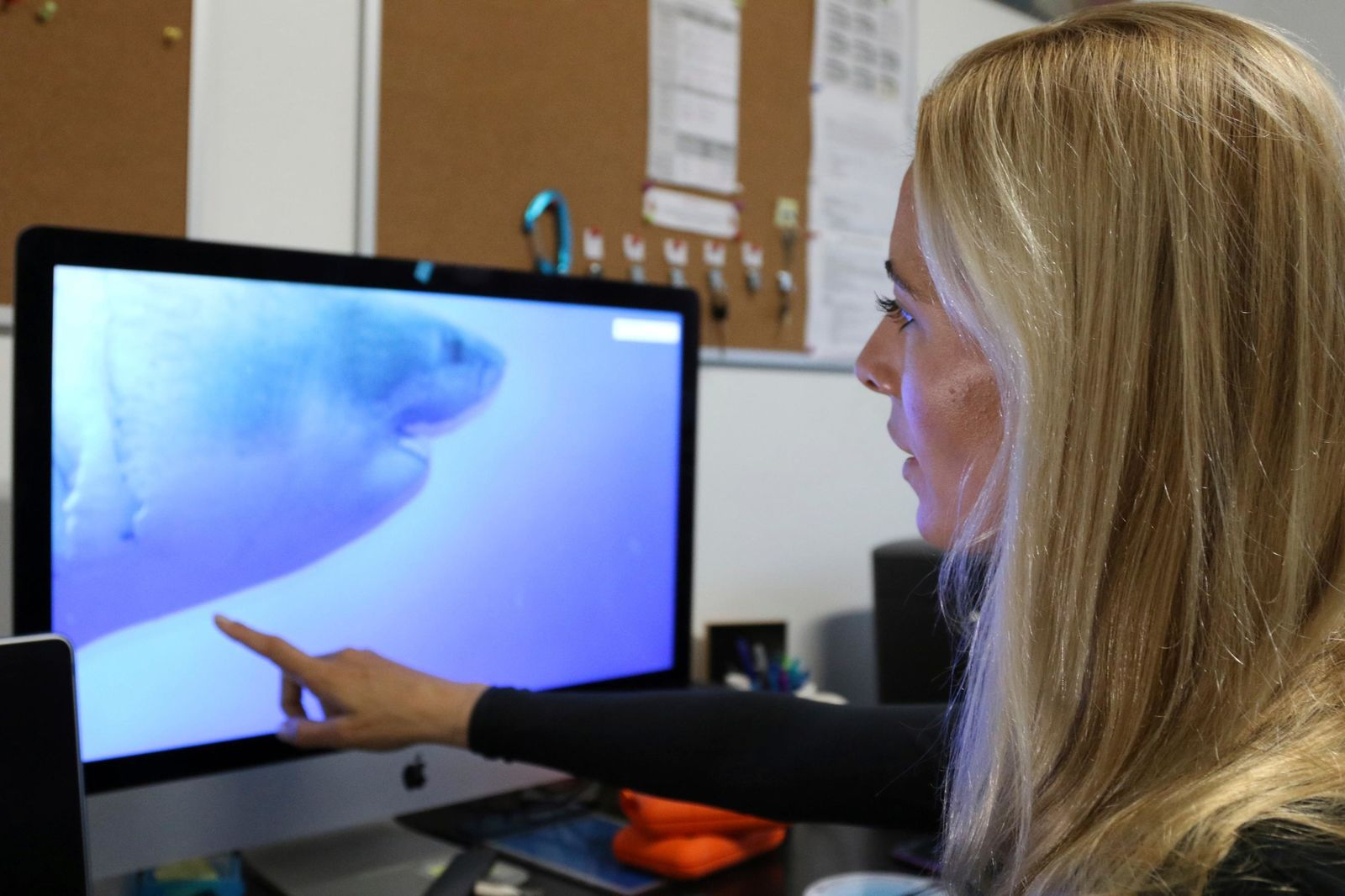 Ocean Ramsey, co-founder of One Ocean Diving and Research, reviews footage of her encounter with a great white shark, Thursday, Jan. 17, 2019 in Haleiwa, Hawaii.{ } (AP Photo/Caleb Jones)