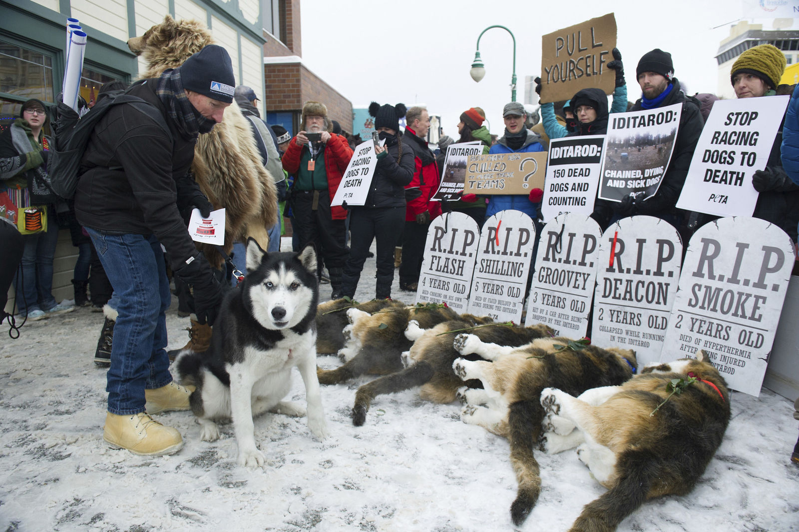 FILE - In this March 3, 2018, file photo, Anchorage resident Terry Fischer, with his Alaskan Husky Litho, happens into the People For the Ethical Treatment of Animals , PETA protest prior to the ceremonial start of the Iditarod Trail Sled Dog Race in Anchorage, Alaska. (AP Photo/Michael Dinneen, File)