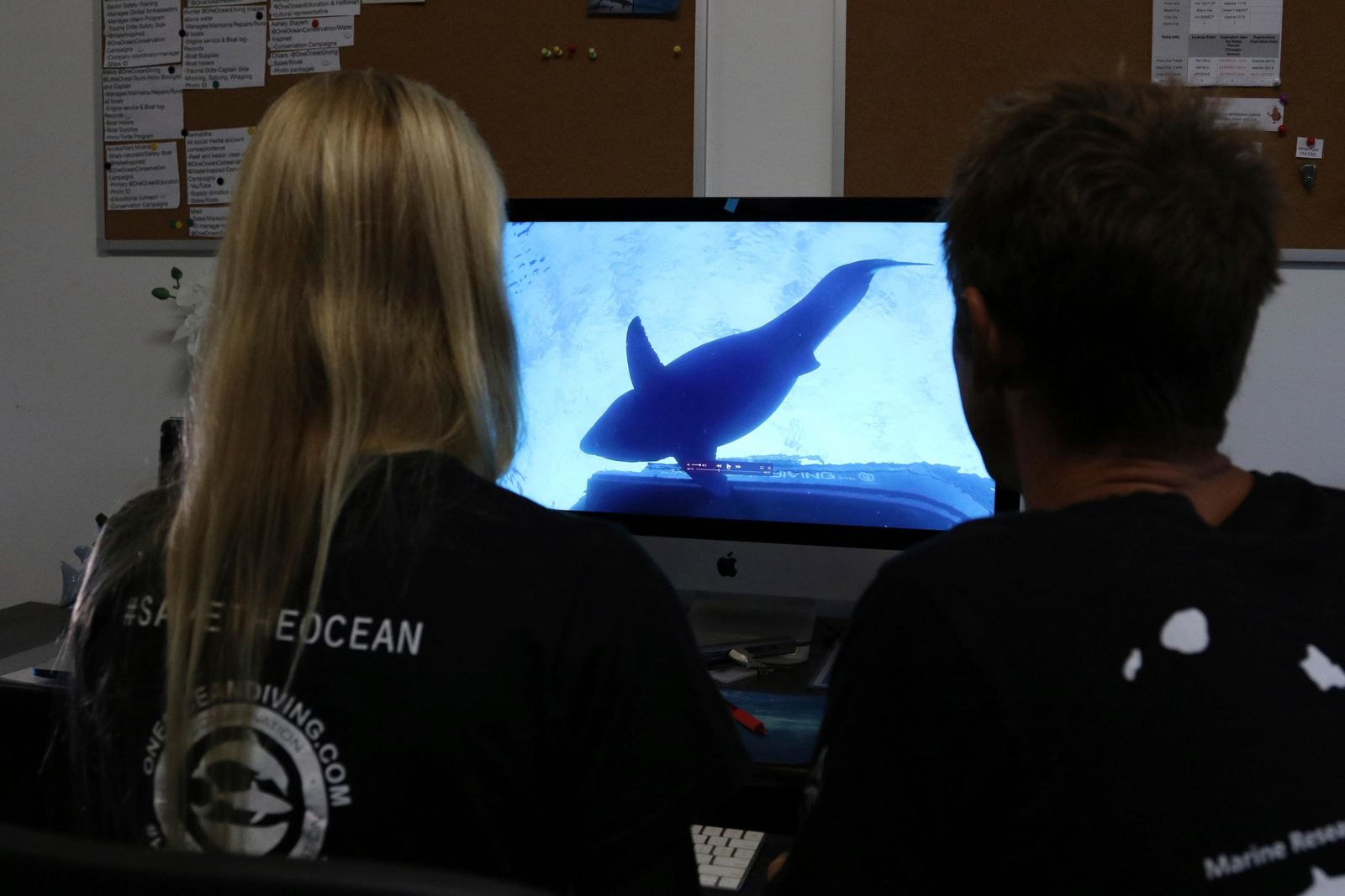 Juan Oliphant, right, and Ocean Ramsey, co-founders of One Ocean Diving and Research, look at footage their encounter with a great white shark, Thursday, Jan. 17, 2019 in Haleiwa, Hawaii. (AP Photo/Caleb Jones)
