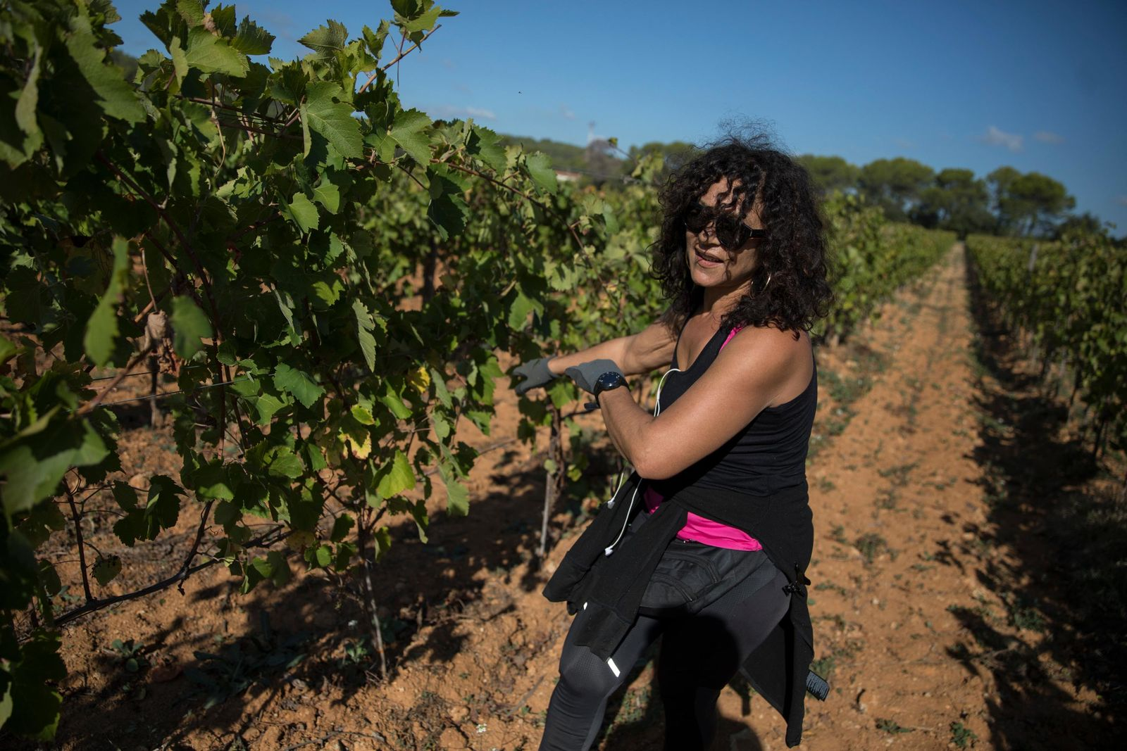 A worker tends to a vineyard after a recent harvest in the southern France region of Provence, Friday Oct. 11, 2019. (AP Photo/Daniel Cole)