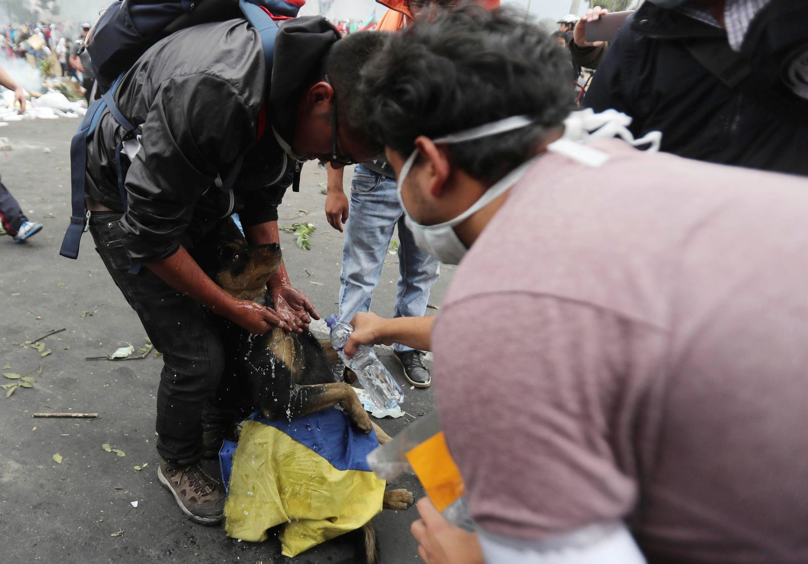 Anti-government demonstrators give assistance to a dog that was overcome by the effects of tear gas during clashes between anti-government demonstrators and the police, near the national assembly building in Quito, Ecuador, Saturday, Oct. 12, 2019. (AP Photo/Dolores Ochoa)