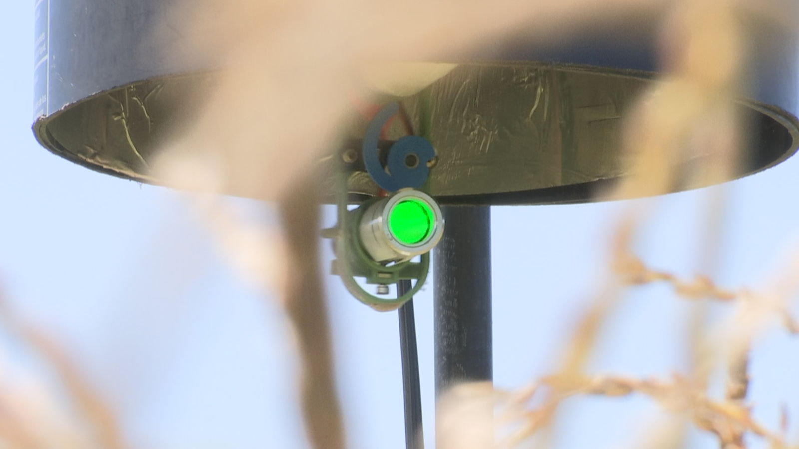 Laser scarecrow is being tested at URI to keep the birds from nibbling on ears of corn. (WJAR)