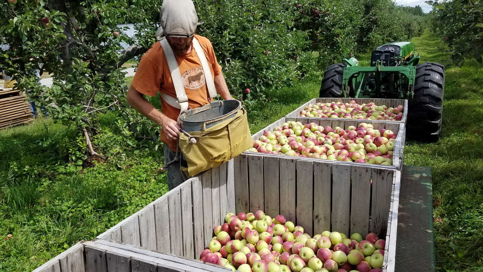 A worker gathering apples to sell at Randall Orchards. (WGME)