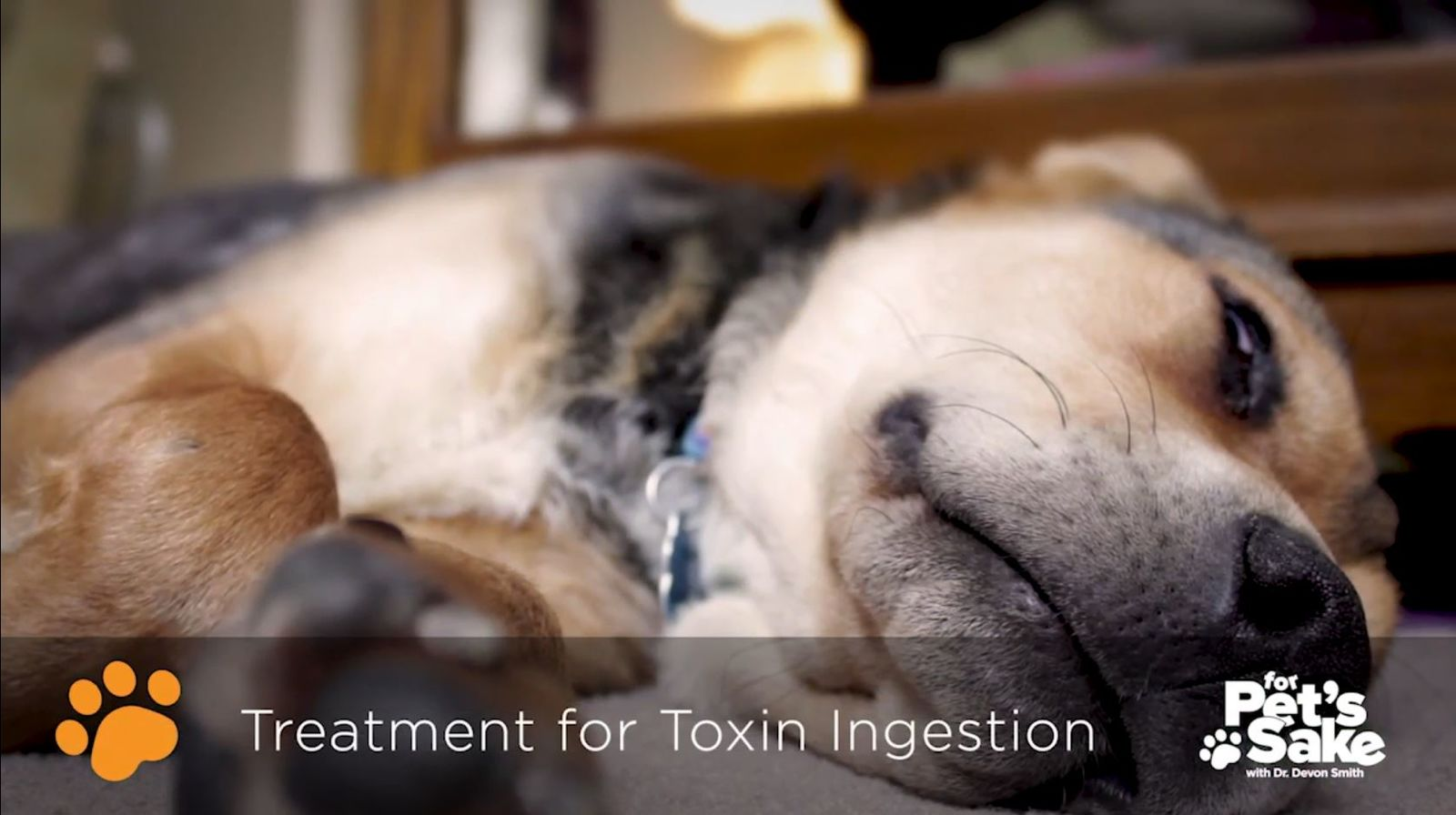 There are treatments available for toxin ingestion{ } (Sinclair Broadcasting Group)