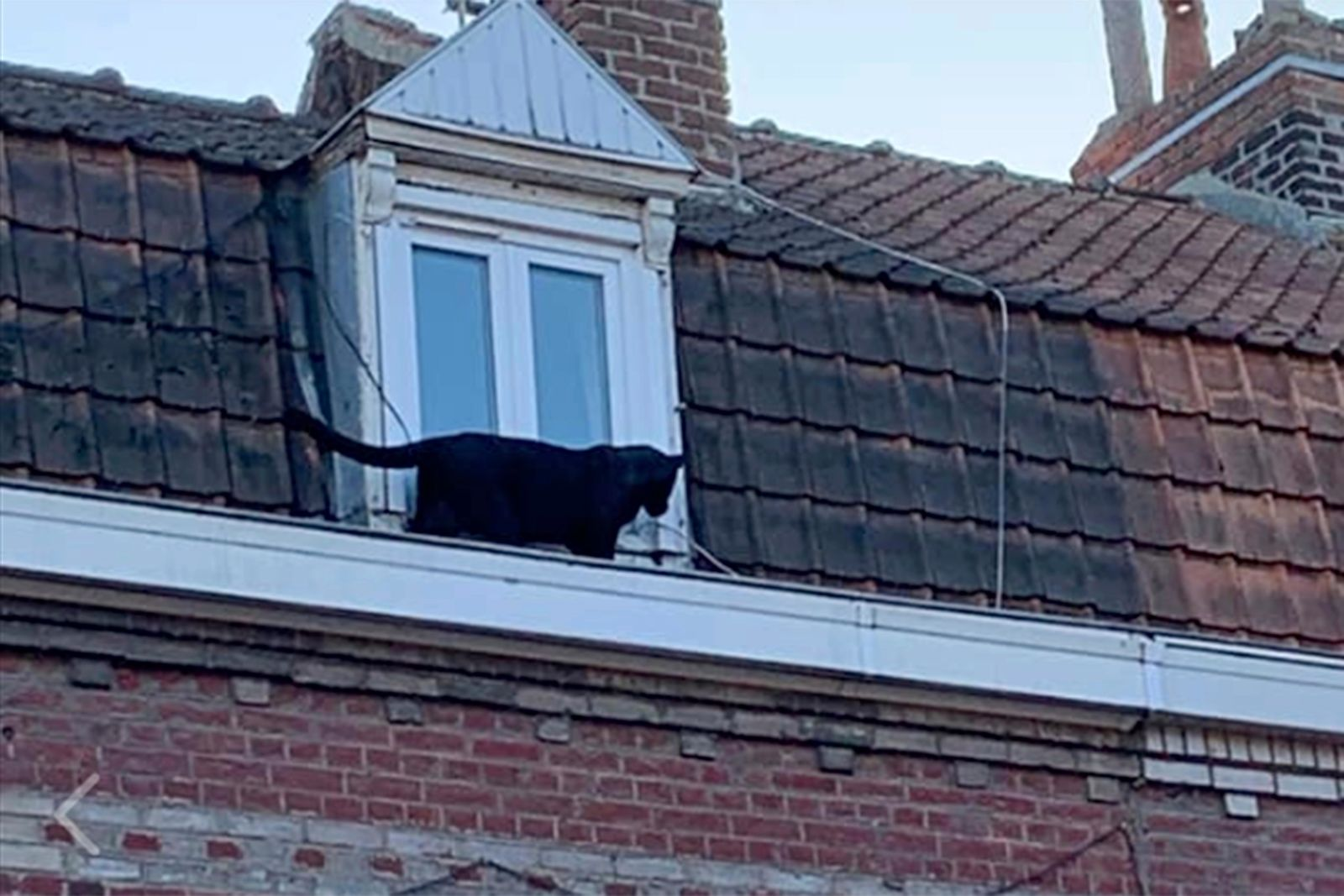 This provided provided by the Fire Brigade of Northern France a panther walks on the gutter of a building in Armentieres, northern France, Wednesday Sept.18, 2019. (Sapeurs-Pompiers du Nord via AP)
