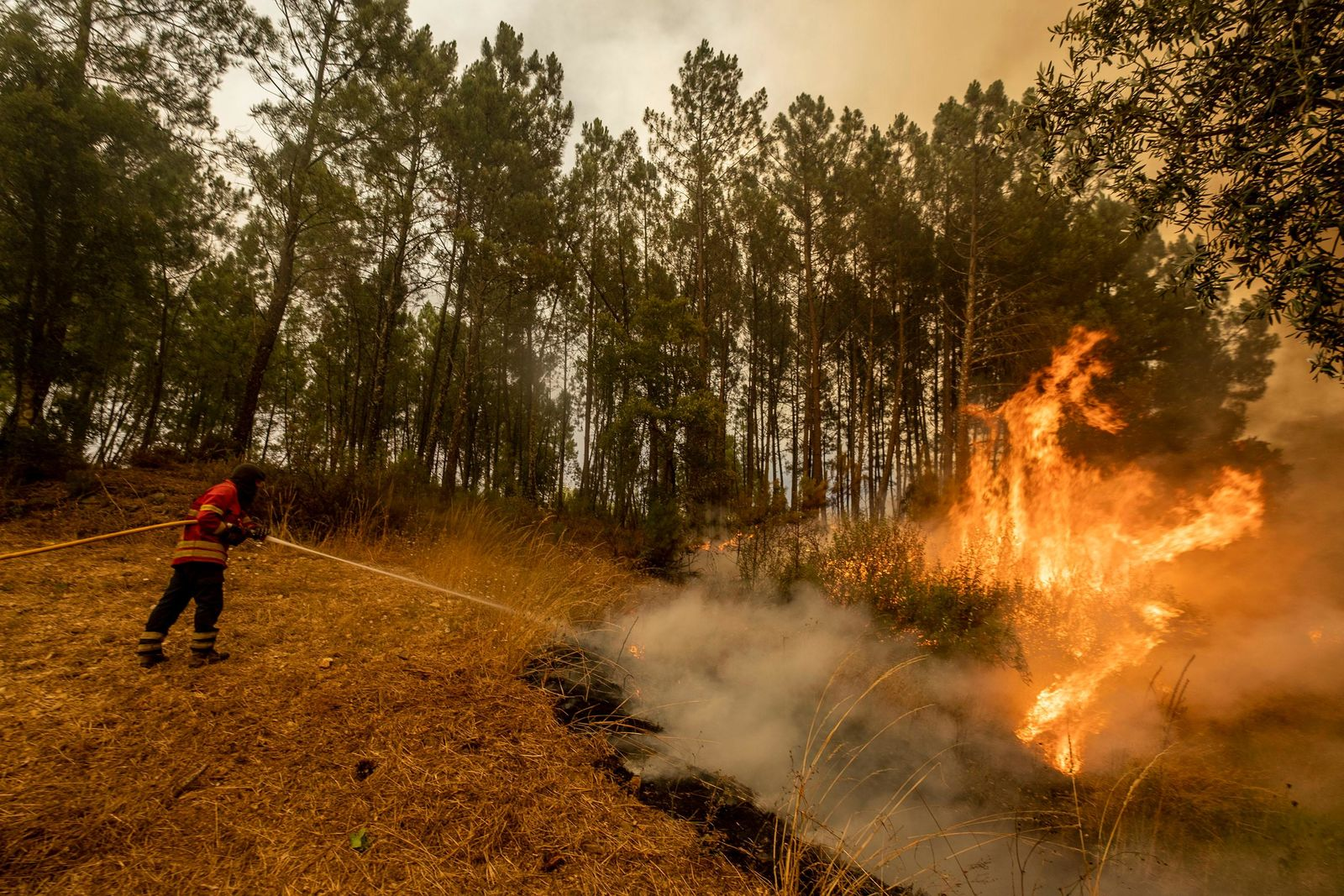 Firefighters try to extinguish a wildfire at the village of Chaveira, near Macao, in central Portugal on Monday, July 22, 2019.{ } (AP Photo/Sergio Azenha)