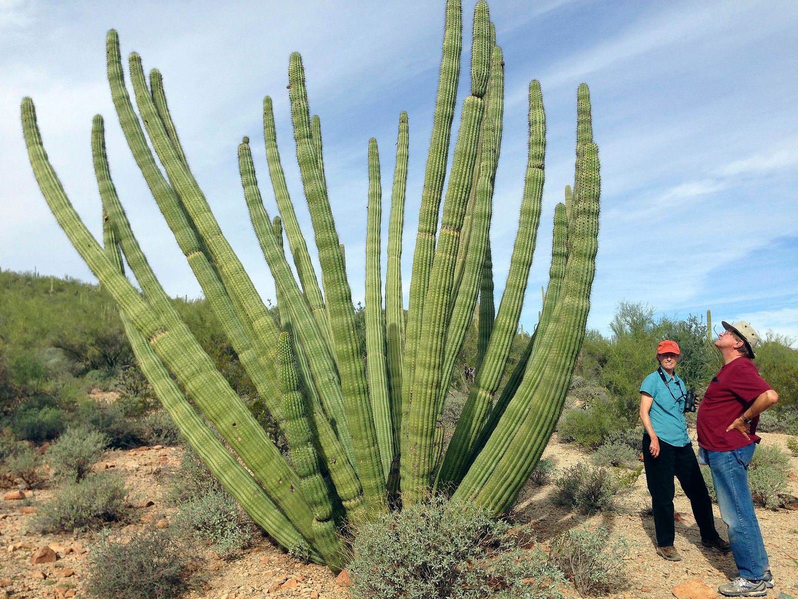 FILE - This Oct. 30, 2014 file photo shows visitors at Organ Pipe Cactus National Monument in Arizona. The federal government plans on replacing barriers through 100 miles of the southern border in California and Arizona, including through a this national monument and a wildlife refuge, according to government documents and environmental advocates. The Department of Homeland Security on Tuesday waived environmental and dozens of other laws to build more barriers along the southern border. (AP Photo/Astrid Galvan, File)
