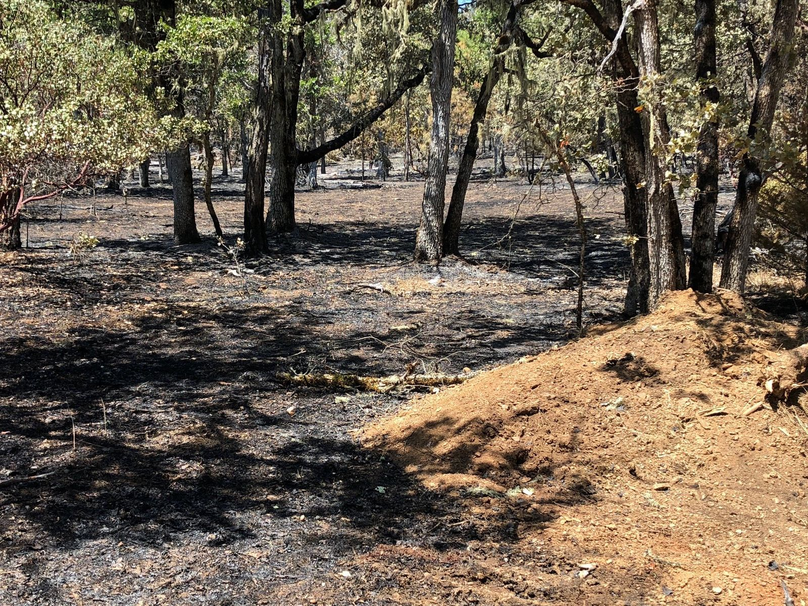 Pictured is a part of the burn area from the East Evans Fire. (Courtesy ODF)