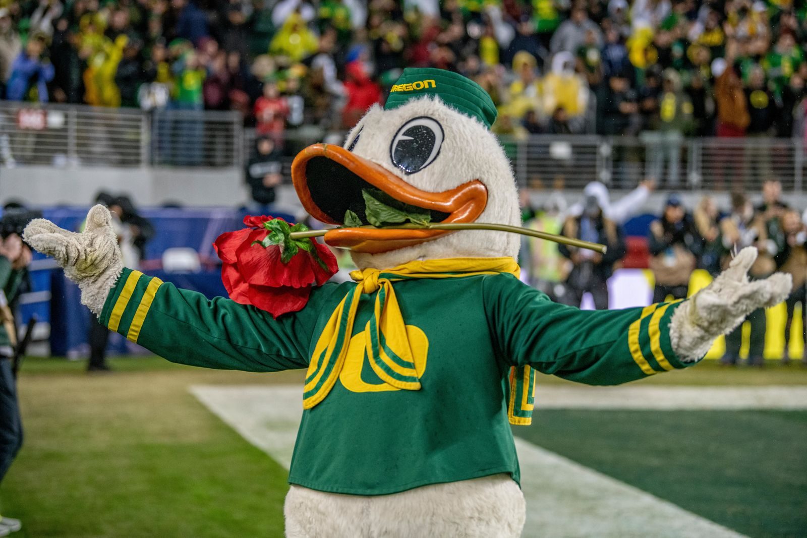 Oregon's mascot, The Duck, with a rose in his mouth hinting Oregon is going to win and move onto the Rose Bowl.  The University of Oregon Ducks defeated the University of Utah Utes 37-15 for the Pac 12 Championship Friday night at Levi's Stadium. Oregon's running back CJ Verdell, #7, rushed for 203 all-purpose yard along with three touchdowns for the night. Verdell was named the games M-V-P for his performace. Oregon's safey Brady Breeze, #25, contributed 9 tackles and one interception. Oregon's defensive end Kayvon Thibodeaux, #5, sacked Utah's quarterback Tyler Huntly, #1, for a total of three times. Oregon's quarterback Justin Herbert, #10, passed for 193 yards with one touchdown. The Oregon Ducks will represent the Pac 12 for the upcoming Rose Bowl game in the new year. Photo by Jeffrey Price
