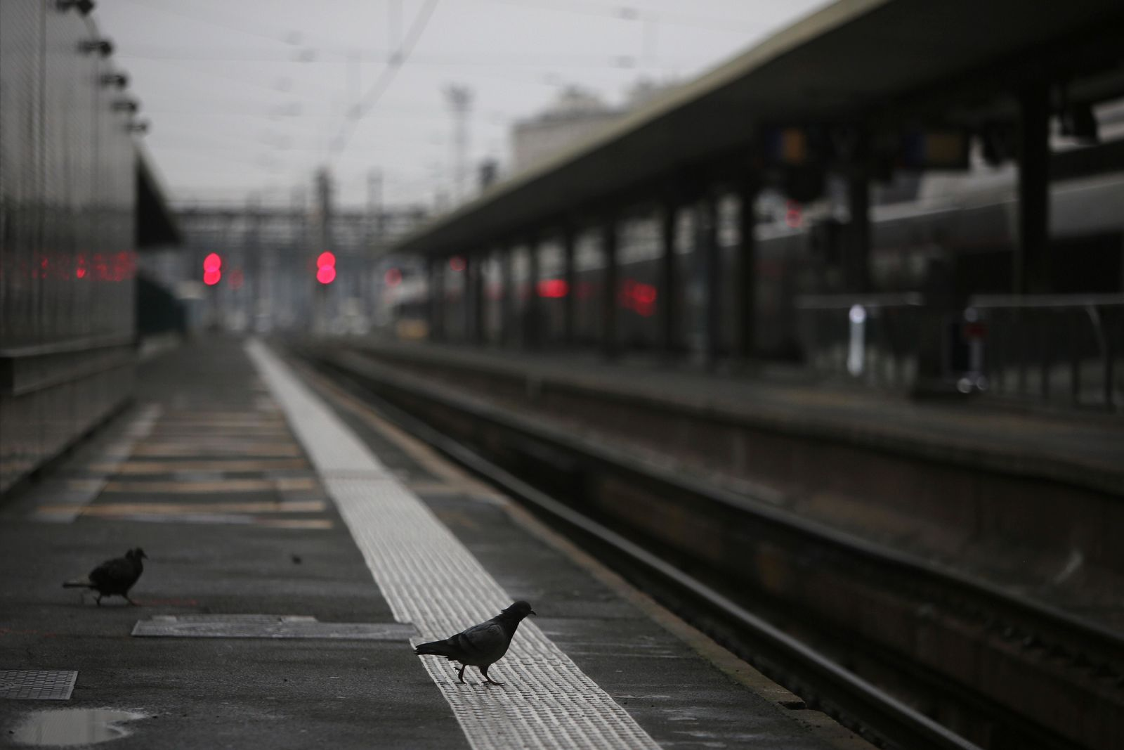 A pigeon perches on a platform at the Gare de Lyon train station, Friday, Dec. 6, 2019 in Paris.{ } (AP Photo/Rafael Yaghobzadeh)