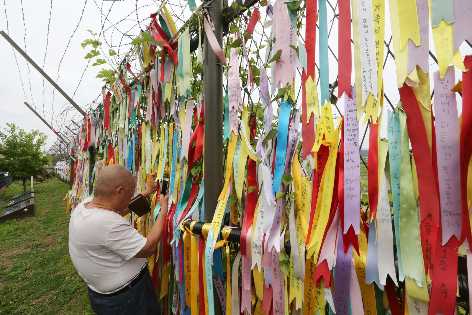A visitor takes photos through a wire fence decorated with ribbons written with messages wishing for the reunification of the two Koreas at the Imjingak Pavilion, near the demilitarized zone of Panmunjom, in Paju, South Korea, Thursday, June 20, 2019.(AP Photo/Ahn Young-joon)