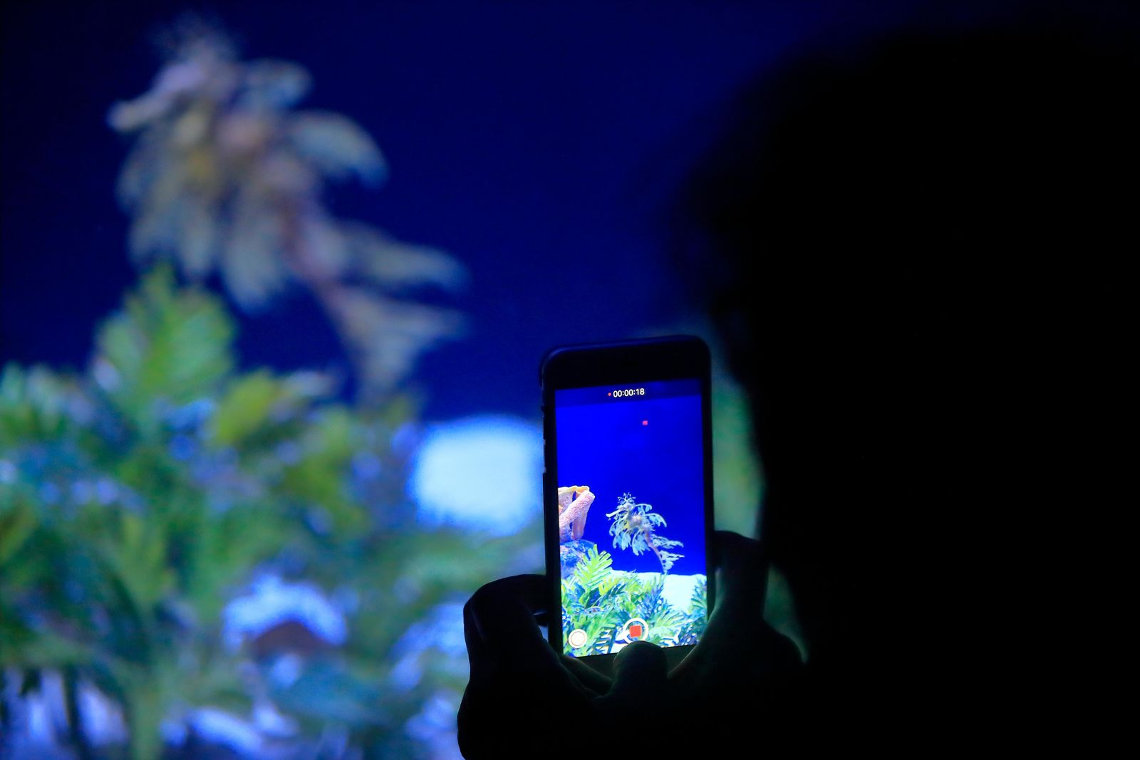 In this Friday, May 17, 2019 photo, a woman records an image of a sea dragon at the Birch Aquarium at the Scripps Institution of Oceanography at the University of California San Diego in San Diego. (AP Photo/Gregory Bull)