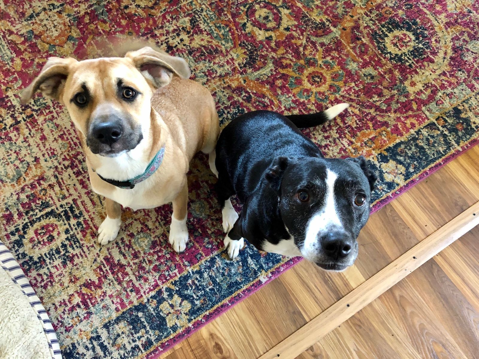 Reporter Genevieve Grippo shares a photo of her two dogs, Ellie on the left and Phoebe on the right. (WWMT)
