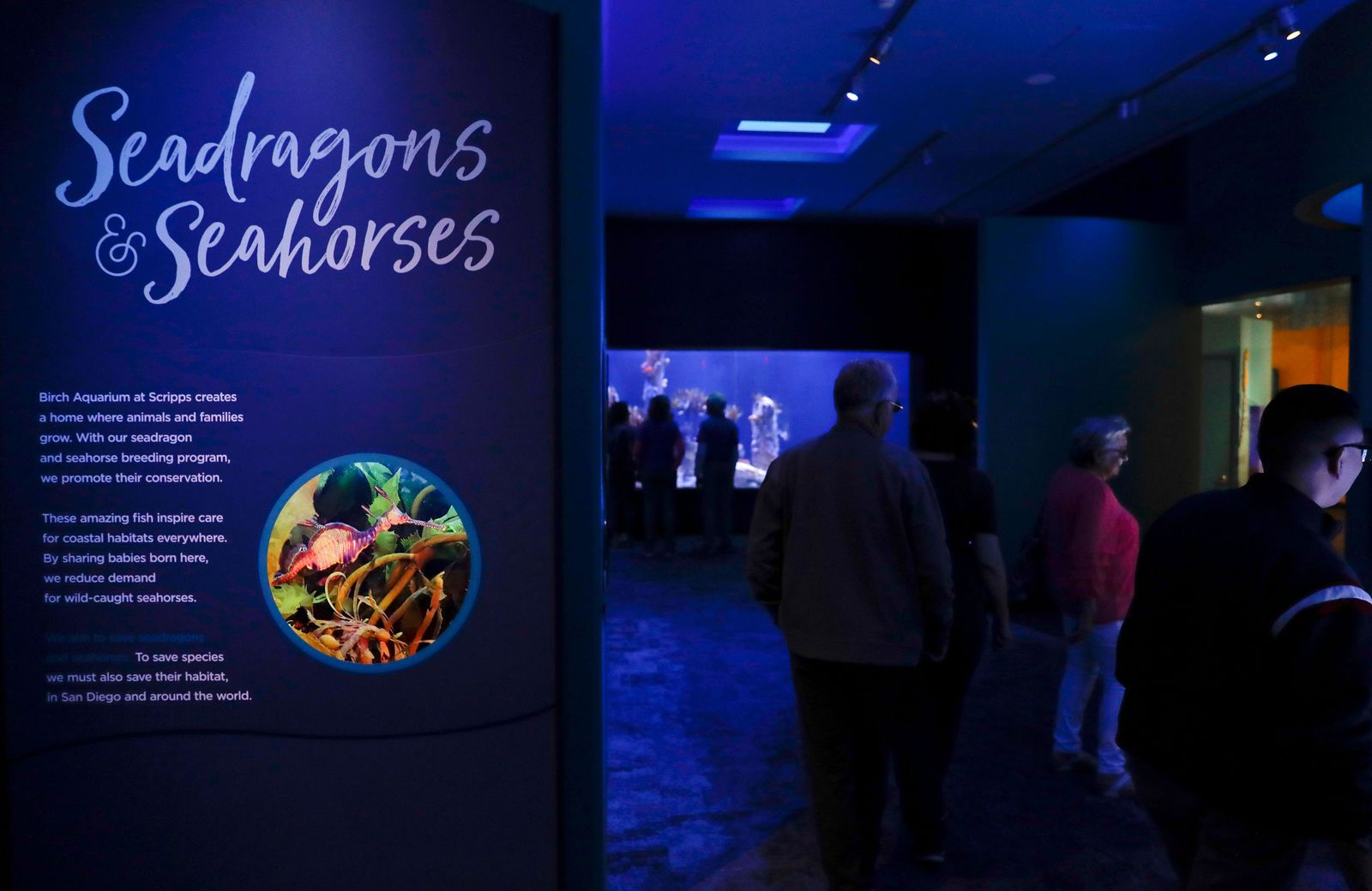 In this Friday, May 17, 2019 photo, visitors walk through an exhibit dedicated to seahorses and sea dragons at the Birch Aquarium at the Scripps Institution of Oceanography at the University of California San Diego in San Diego.{ } (AP Photo/Gregory Bull)